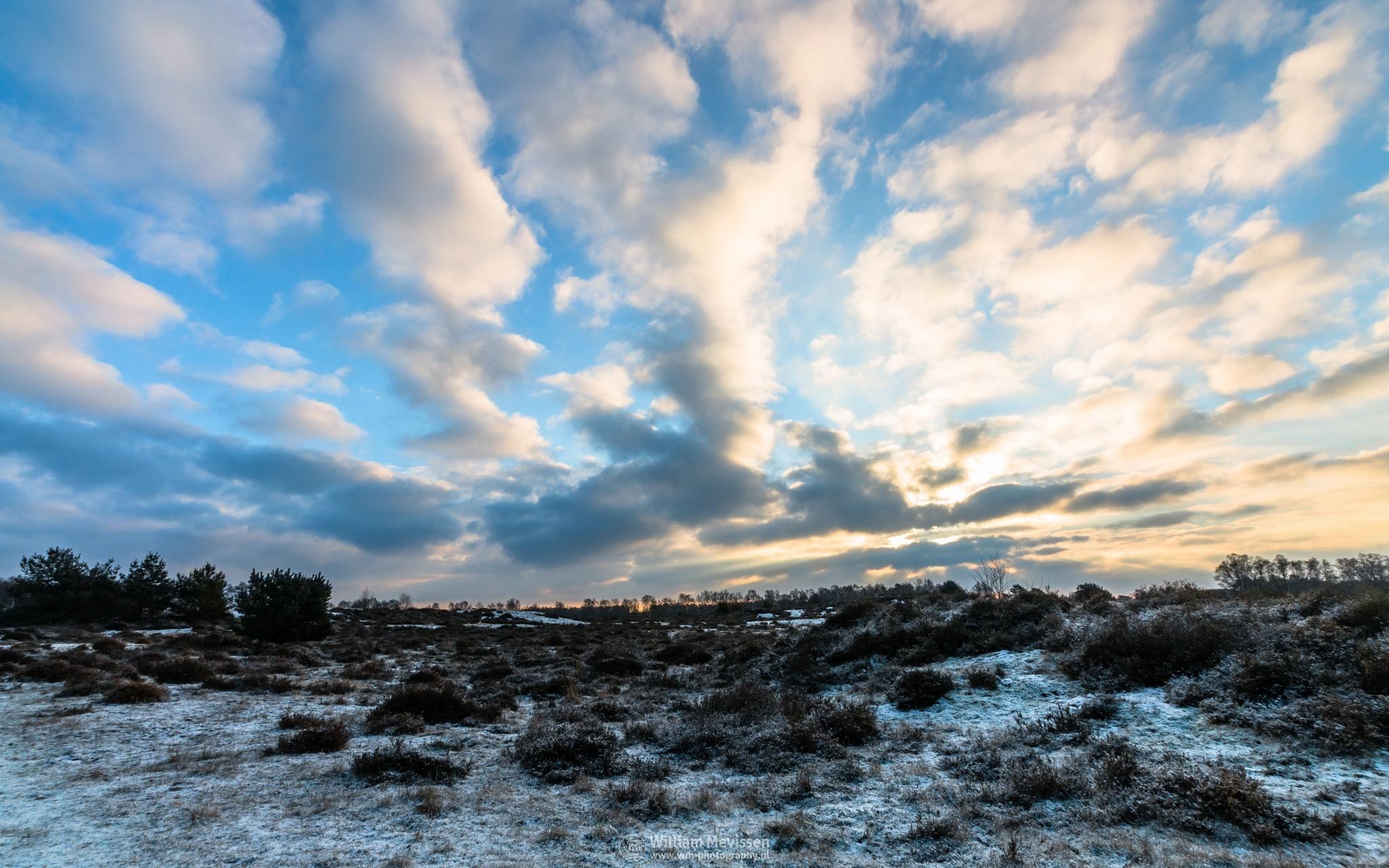 Photo in Landscape #bergerheide #forest #woods #heathland #maasduinen #limburg #noord-limburg #nieuw-bergen #bergen #national park #nature #sand #dunes #sanddunes #tree #trees #sky #clouds #twilight #snow #ice #winter #heather #cloudy #sunrise #sun
