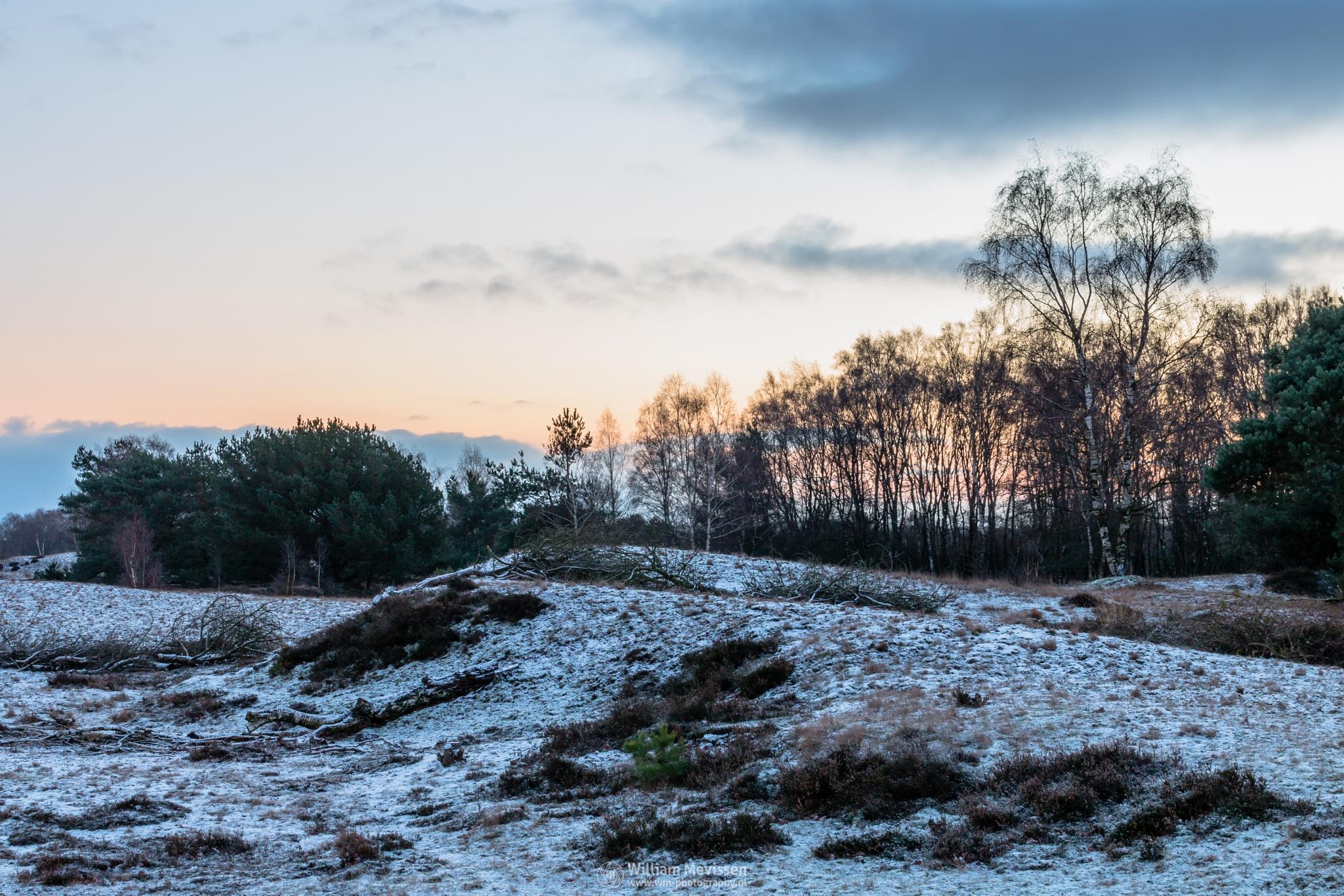 Photo in Nature #bergerheide #forest #heathland #woods #maasduinen #limburg #noord-limburg #nieuw-bergen #bergen #national park #nature #sand #dunes #sanddunes #tree #trees #sky #clouds #twilight #snow #winter #touch #heather