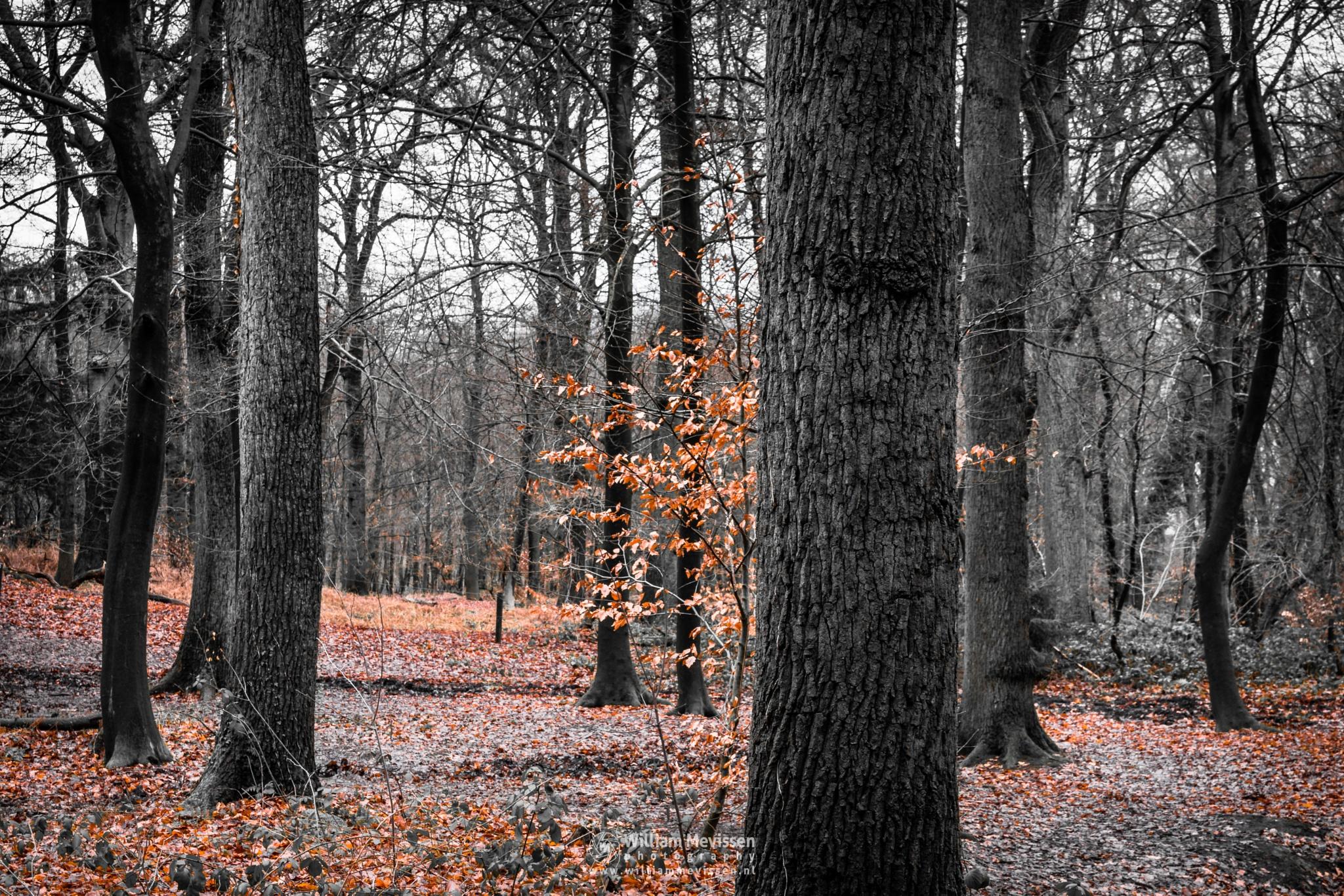 A Touch of Autumn by William Mevissen