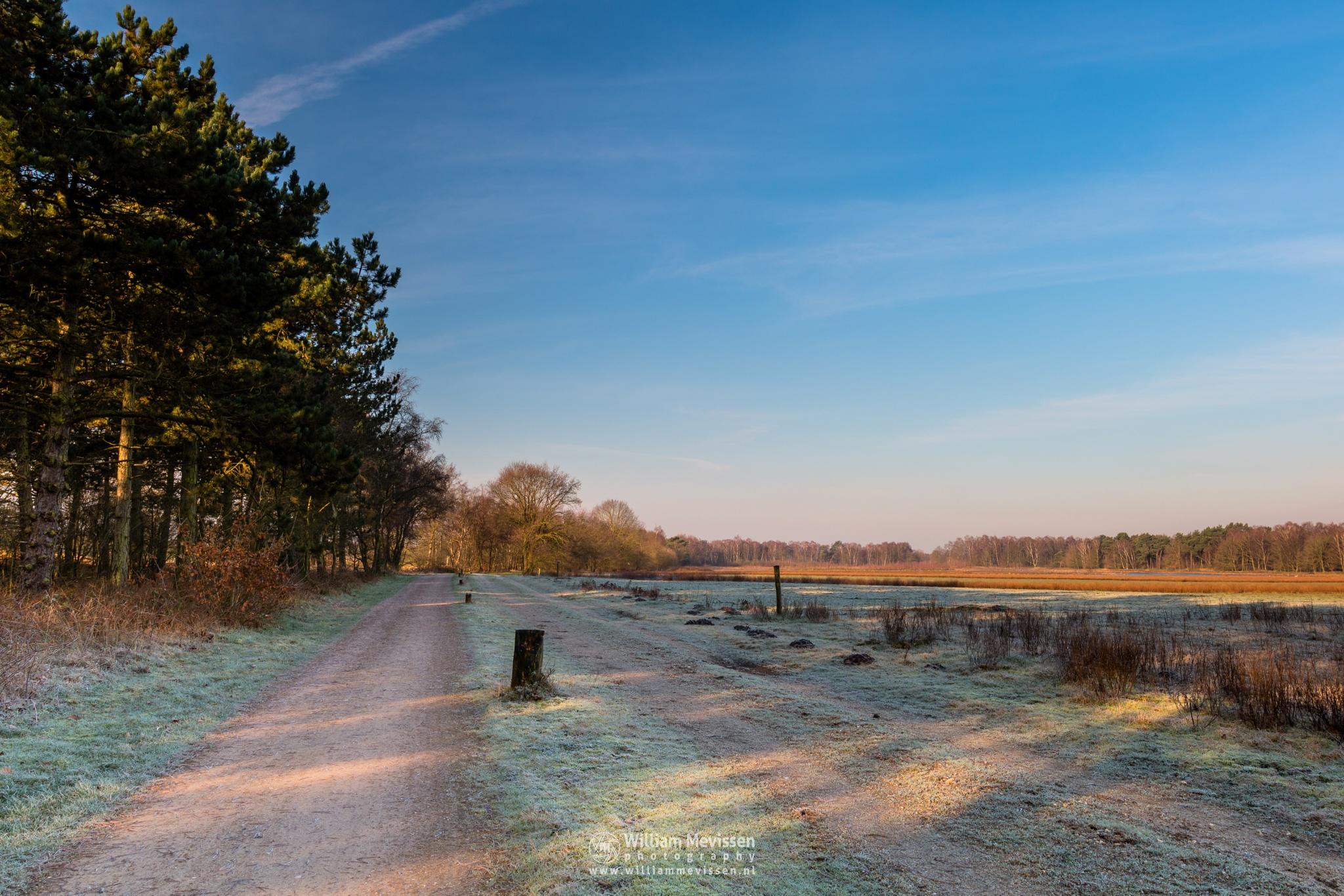 Photo in Landscape #bergerheide #forest #heathland #woods #fen #maasduinen #limburg #noord-limburg #nieuw-bergen #bergen #national park #nature #frosty #frost #sand #dunes #sanddunes #path #winter #sunny #dirt road