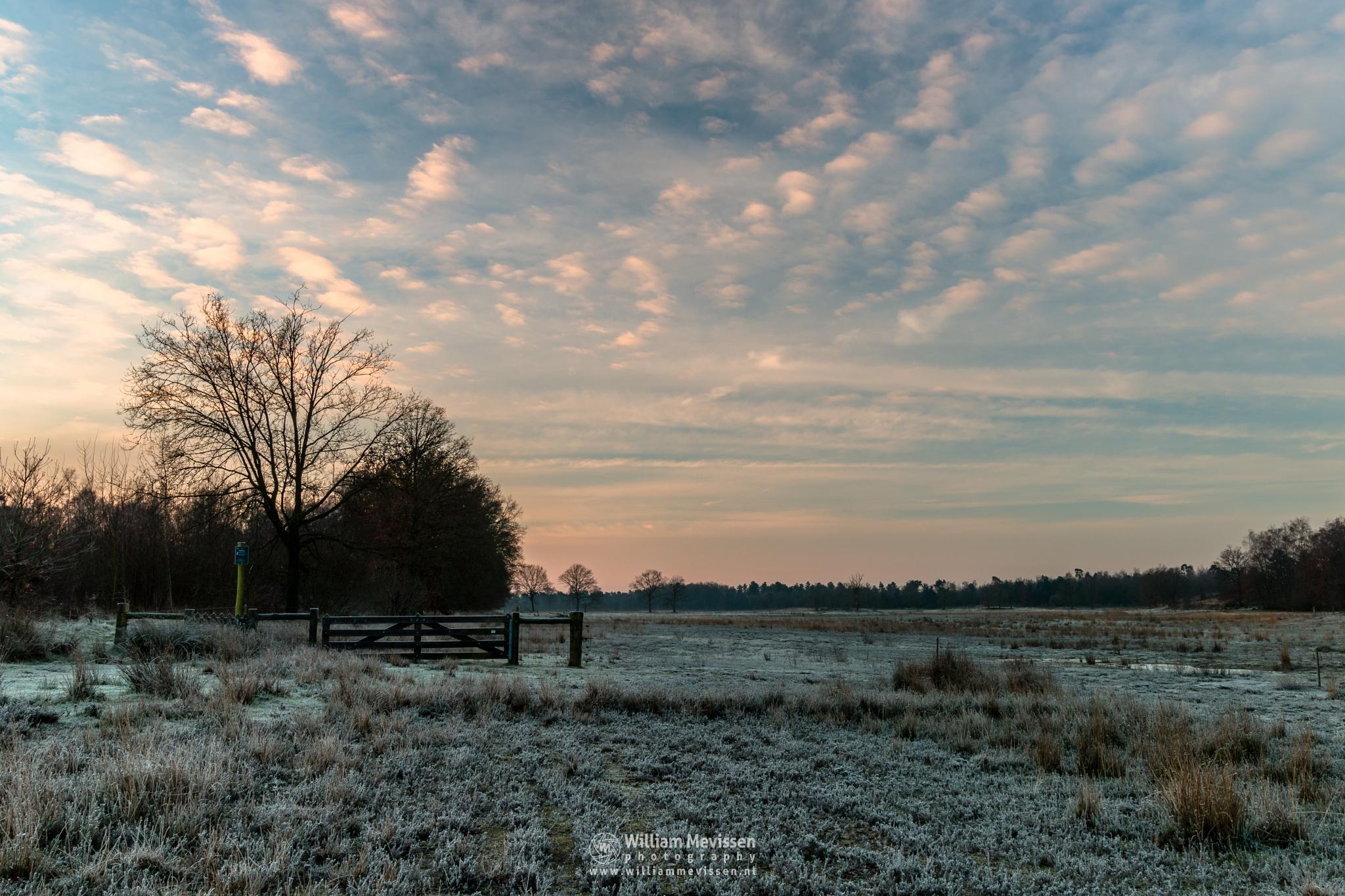 Photo in Landscape #bergerheide #forest #woods #heathland #maasduinen #limburg #noord-limburg #nieuw-bergen #national park #frosty #frost #sand #dunes #sanddunes #bergen #nature #fen #path #winter #sunrise #golden #land #light #fence #gate