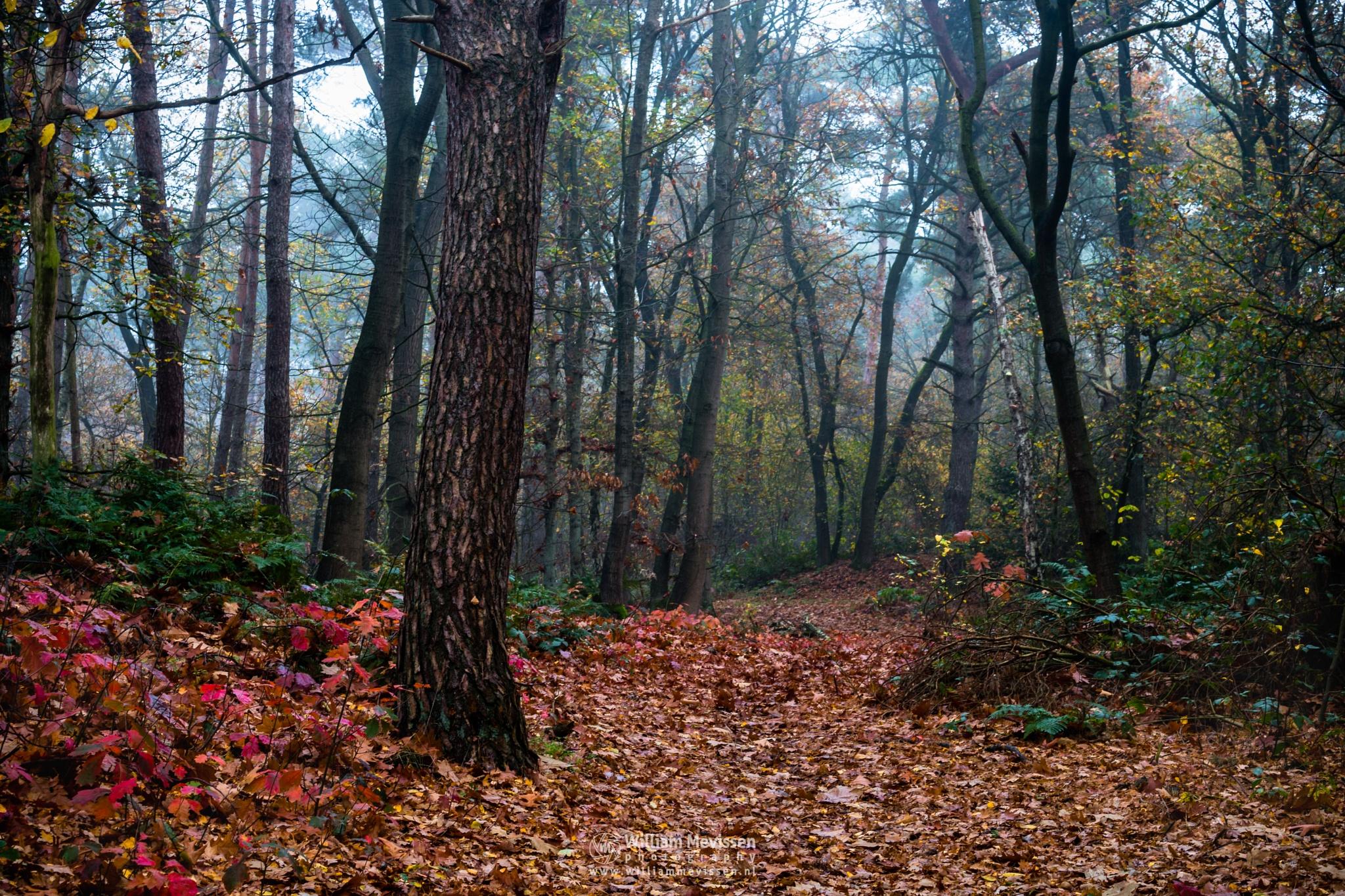 Forest Bridle Path by William Mevissen