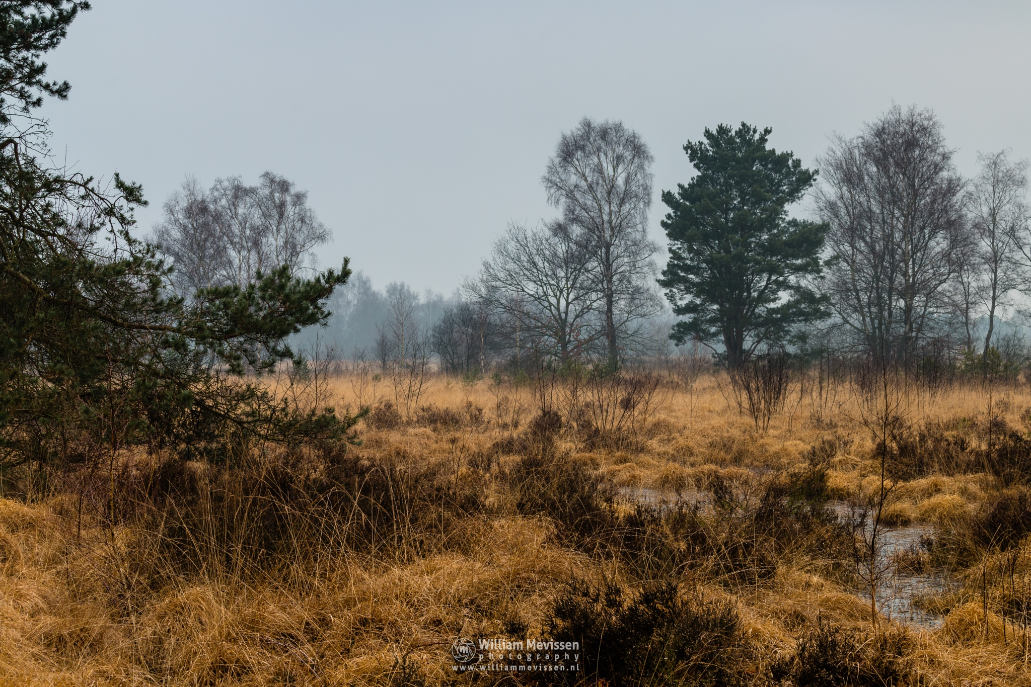 Photo in Nature #bergerheide #forest #woods #heathland #maasduinen #fen #limburg #noord-limburg #nieuw-bergen #lelieven #trees #winter #frost #sand #frosty #bergen #national park #nature