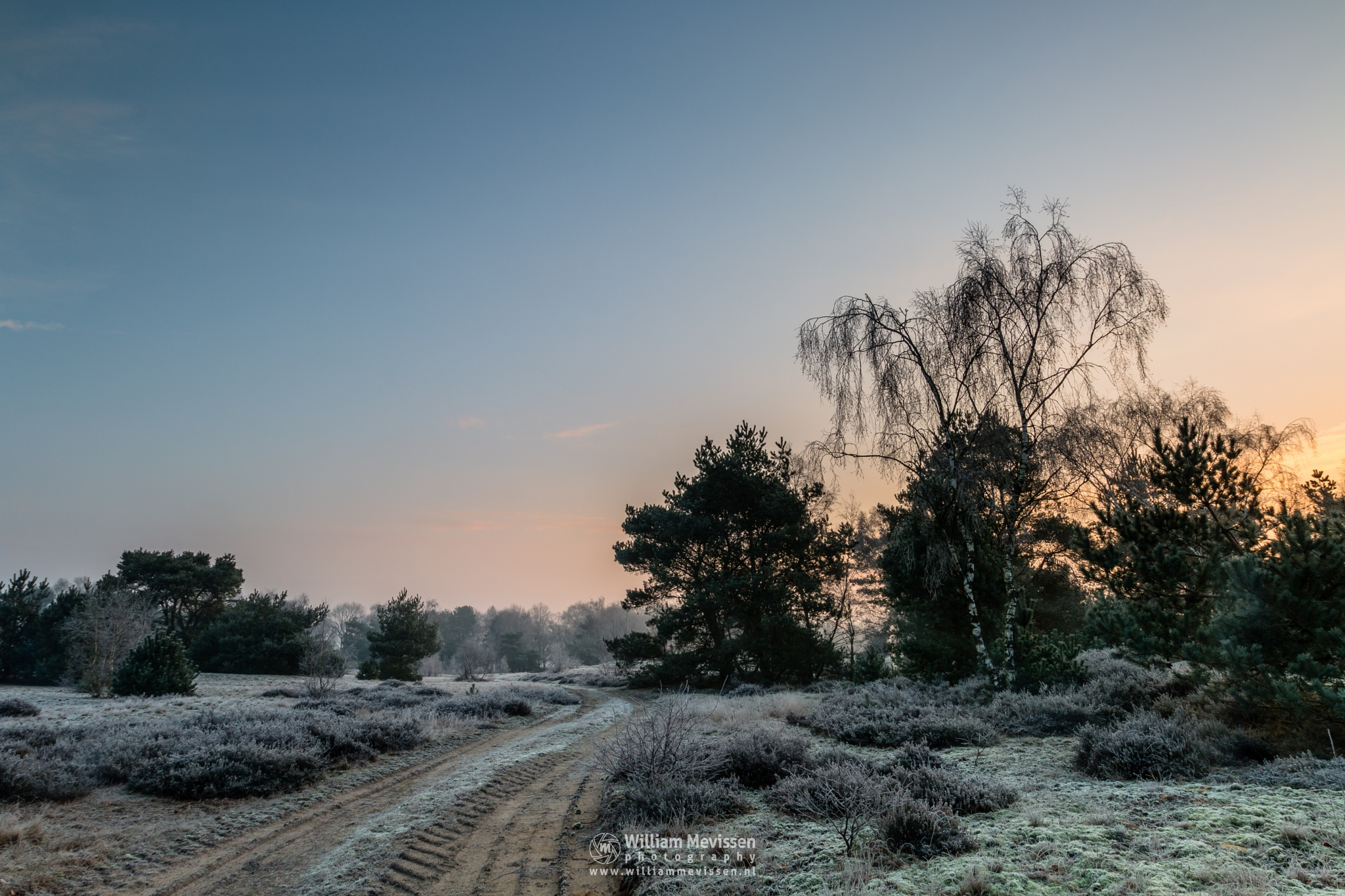 Photo in Nature #bergerheide #forest #woods #heathland #maasduinen #limburg #noord-limburg #nieuw-bergen #bergen #national park #nature #frosty #frost #winter #sunrise #light #trees #fog #foggy #mist #misty #moss #path #dirt road