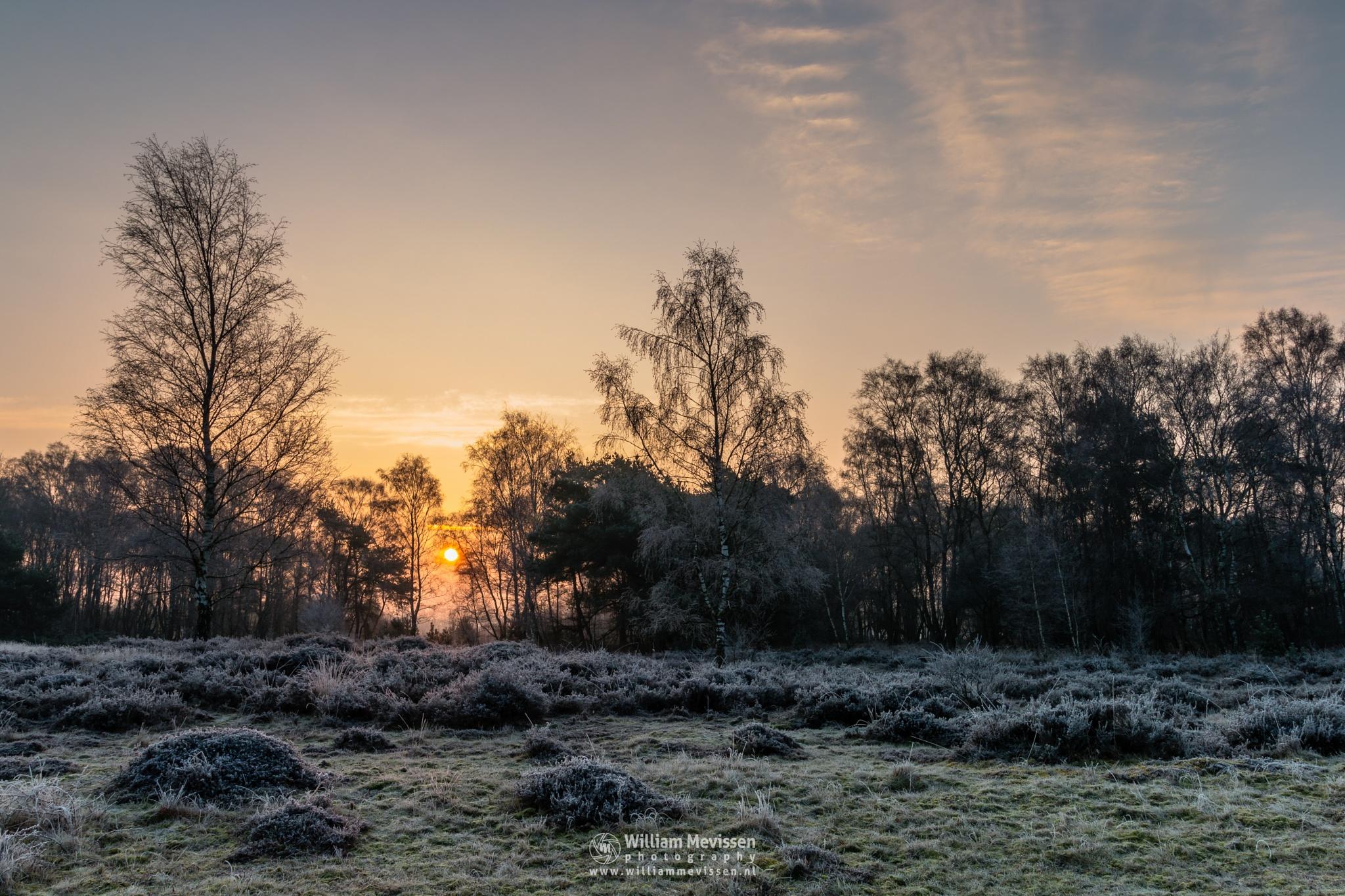 Photo in Nature #bergerheide #forest #woods #heathland #fen #maasduinen #limburg #noord-limburg #nieuw-bergen #bergen #national park #nature #frosty #frost #winter #sunrise #light #trees #fog #foggy #mist #misty #moss