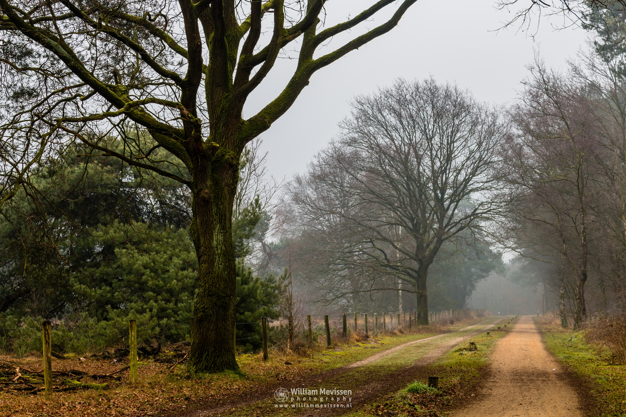 Foggy Path by William Mevissen