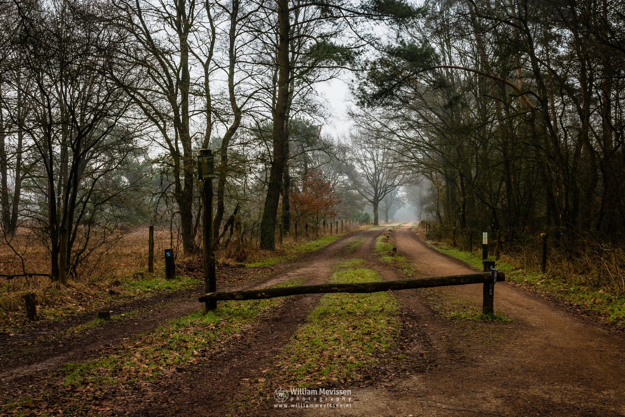 Foggy Dirt Road by William Mevissen