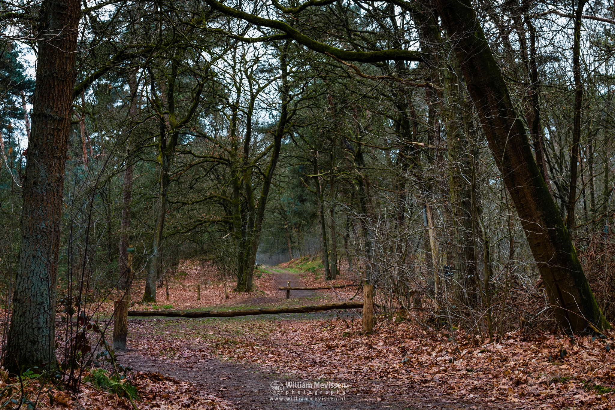 Forest Intersection by William Mevissen