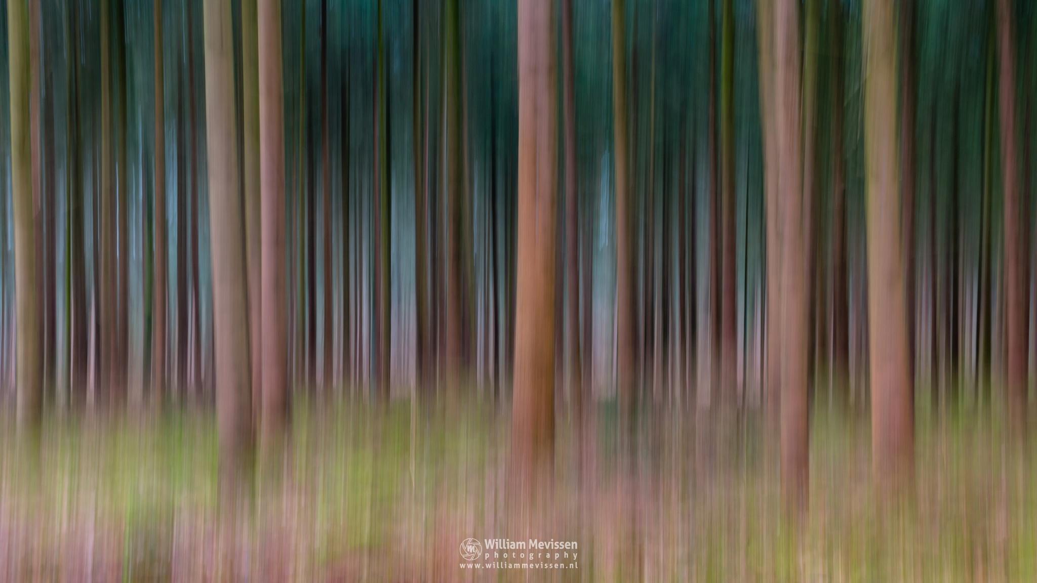 Lines Of Trees by William Mevissen