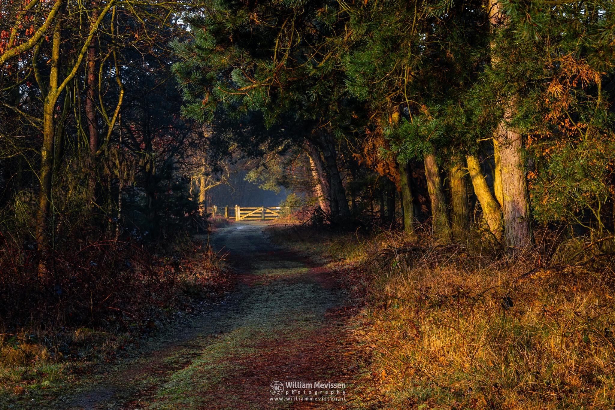 Sunrise Gate by William Mevissen
