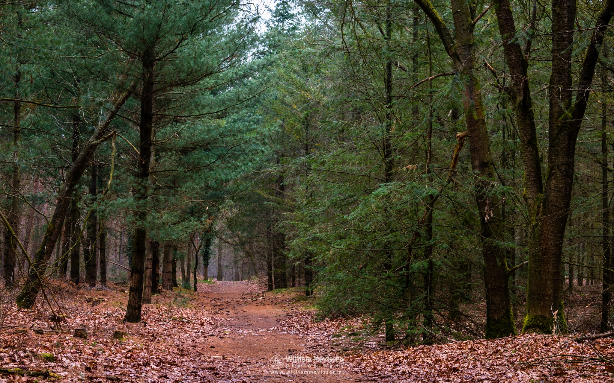Path Into The Woods by William Mevissen