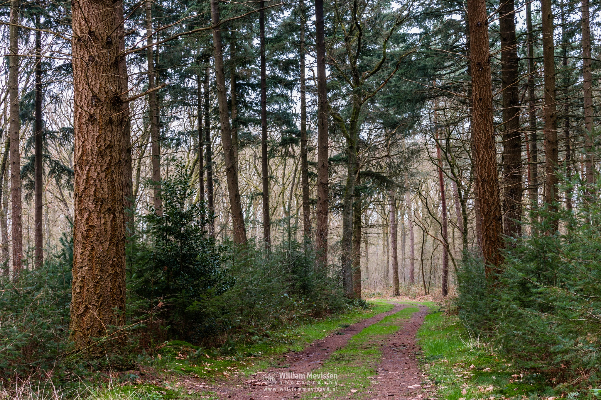 Path Of Trees by William Mevissen