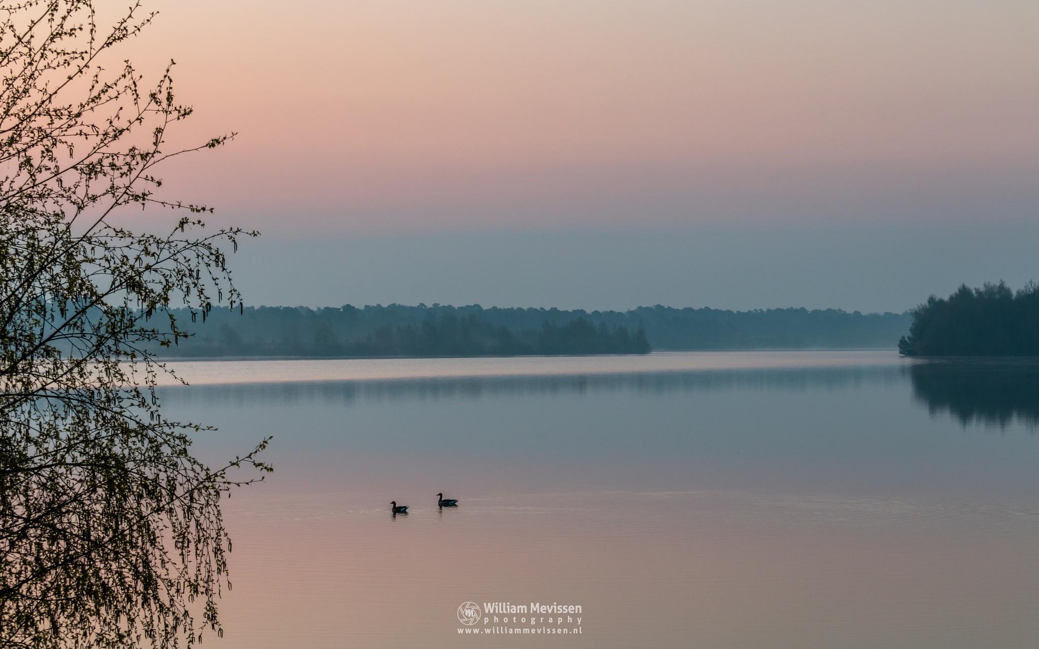 Photo in Landscape #pine #forest #limburg #maasduinen #nature #noord-limburg #pine forest #reindersmeer #tree #misty #trees #well #bergen #national park #twilight #sunrise #mist #fog #foggy #light #ducks