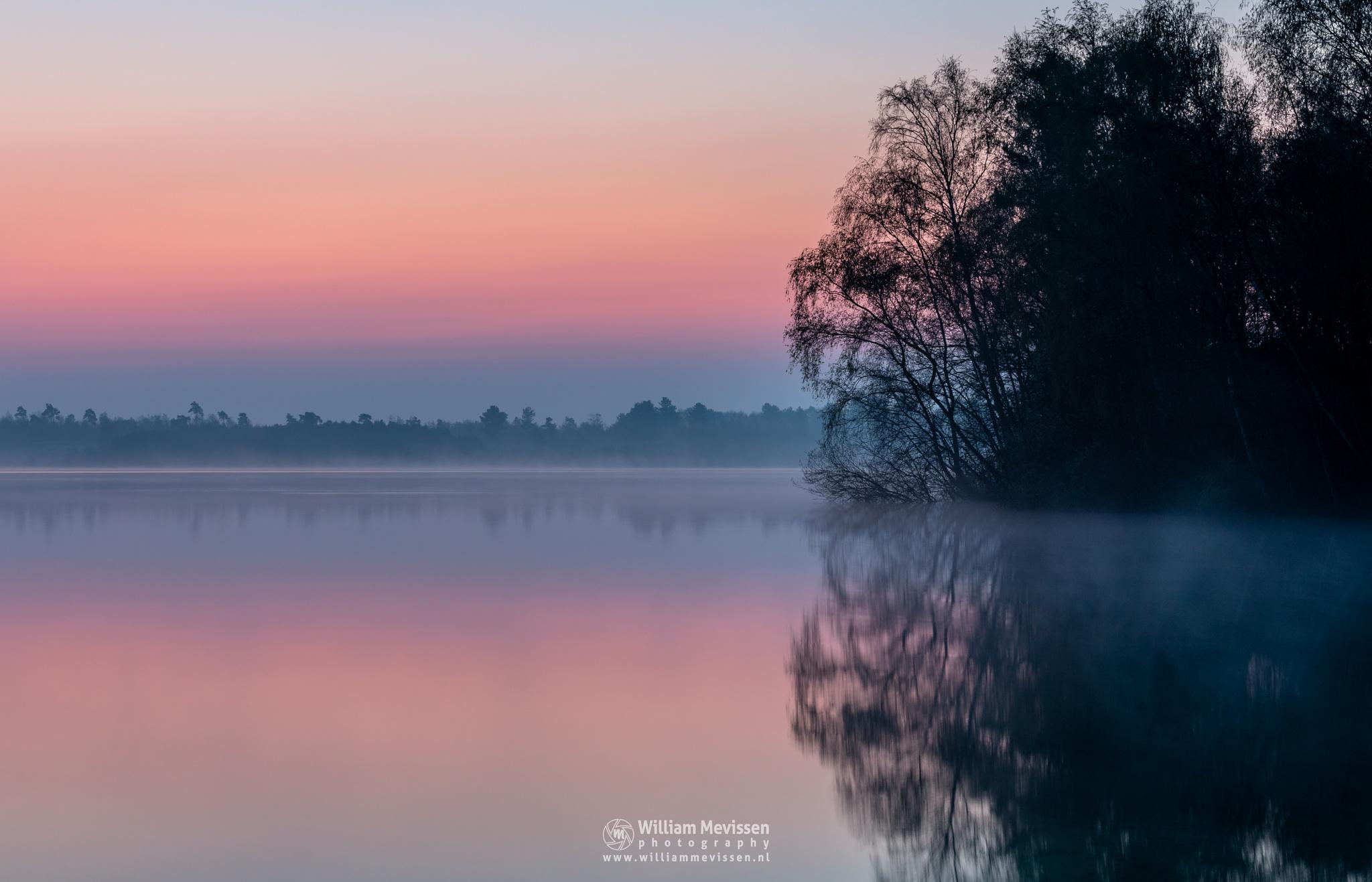Photo in Landscape #tree #trees #pine #green #pine forest #forest #lake #reindersmeer #maasduinen #limburg #noord-limburg #well #national park #foggy #nature #twilight #silence #red #orange #pink #mist #misty #fog