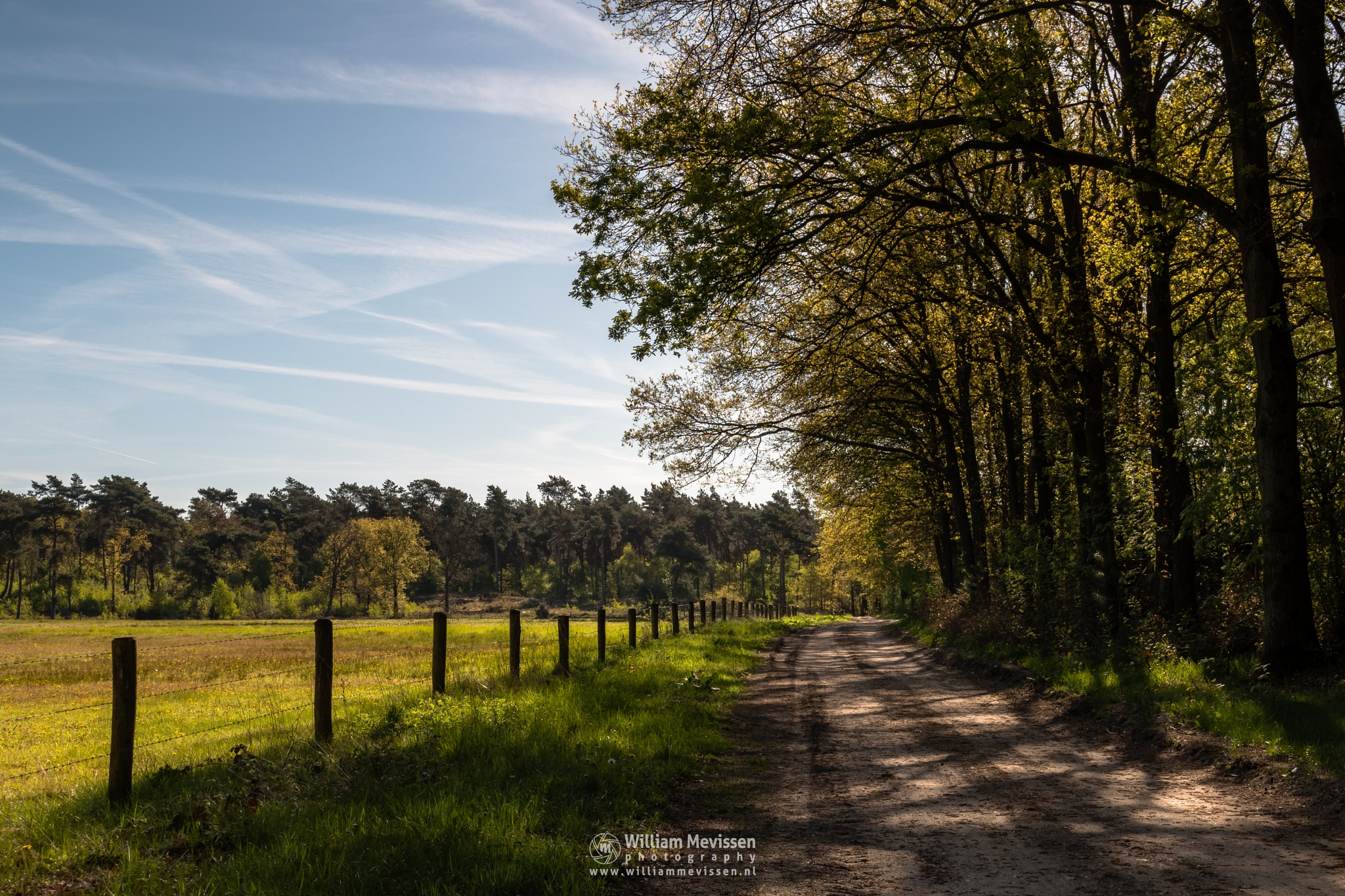 Photo in Landscape #ravenvennen #lomm #limburg #noord-limburg #arcen #nature #nature reserve #forest #woods #velden #netherlands #venlo #path #dirtroad #sun #sunny #sky #shadows #walk #green #spring