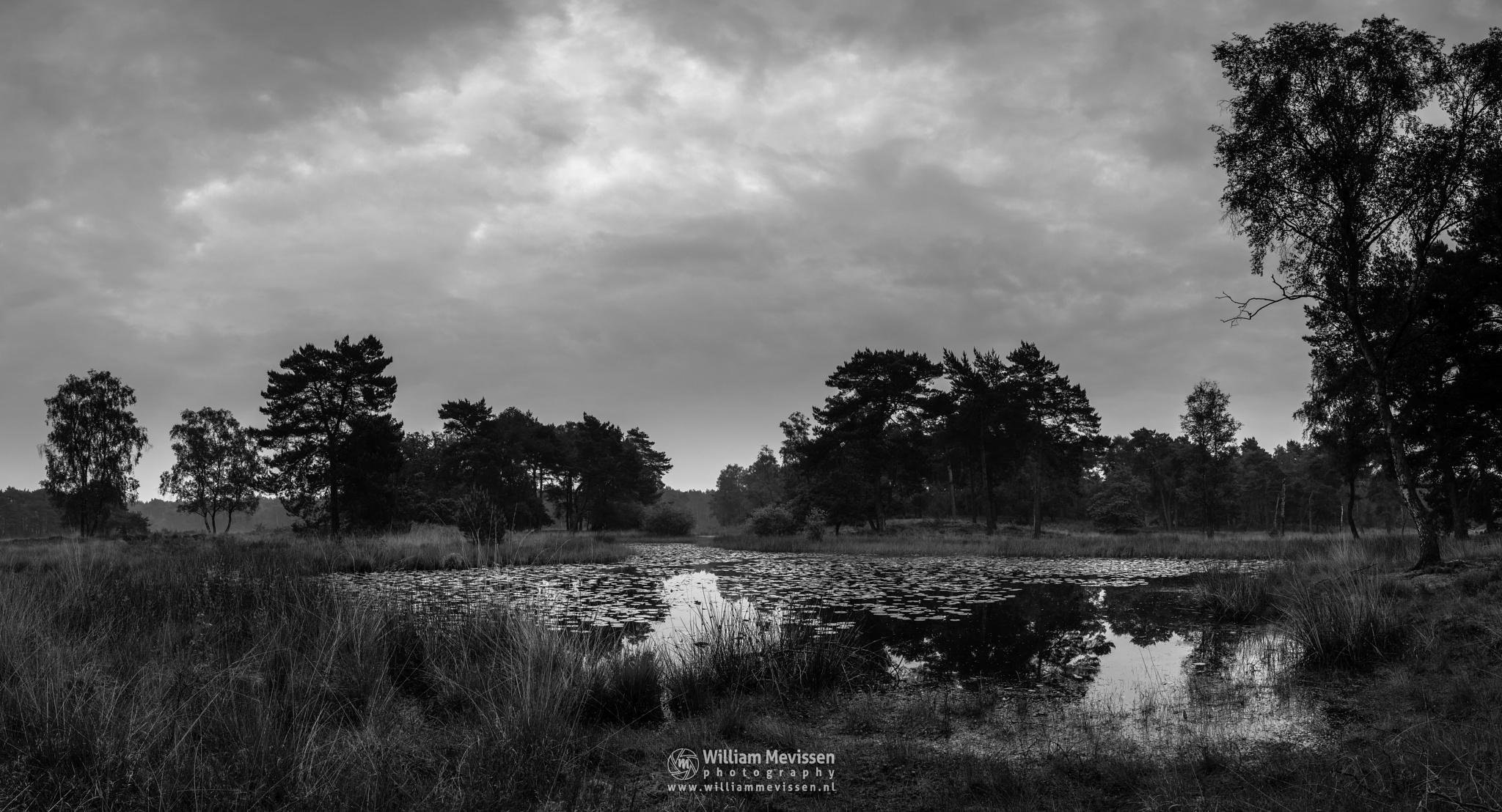 Photo in Black and White #ravenvennen #lomm #limburg #noord-limburg #arcen #nature #nature reserve #forest #woods #velden #netherlands #venlo #cloudy #fen #heatland #riverdunes #dune #swamp #misty #fog #blackandwhite