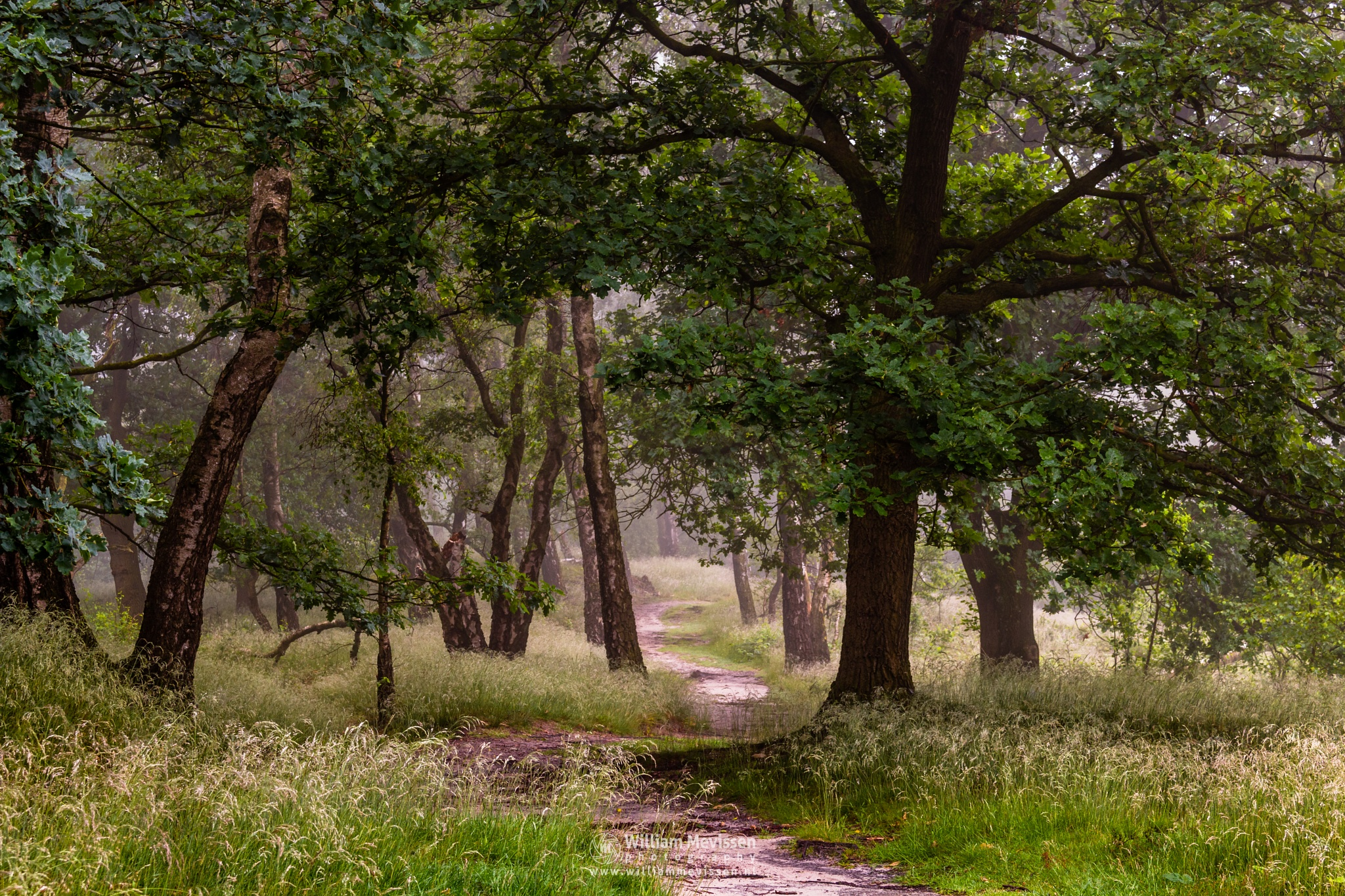 Misty Path Of Trees by William Mevissen