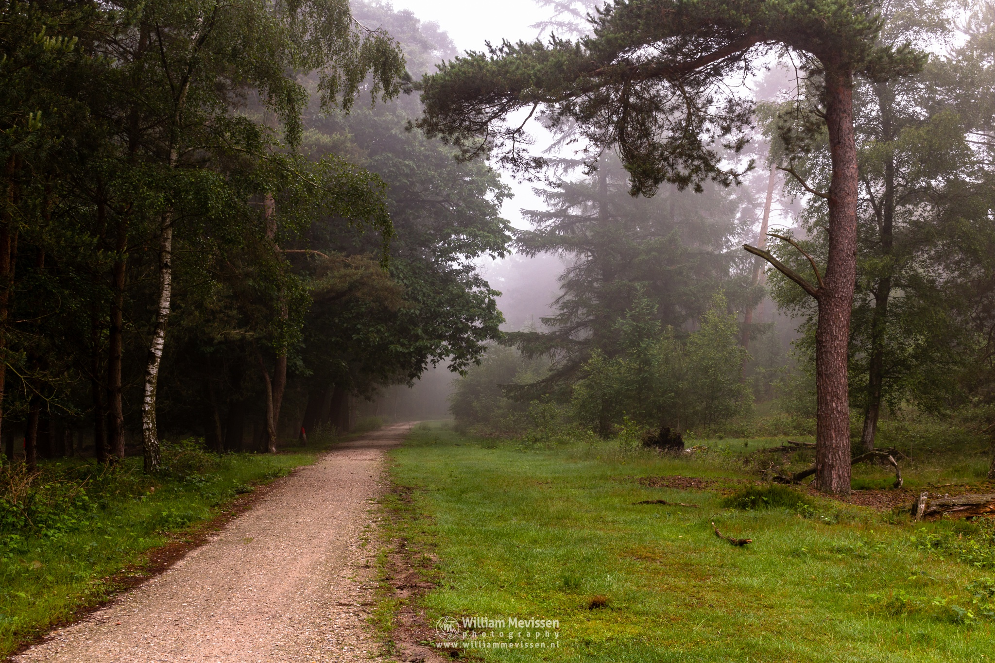 Path Into The Fog by William Mevissen
