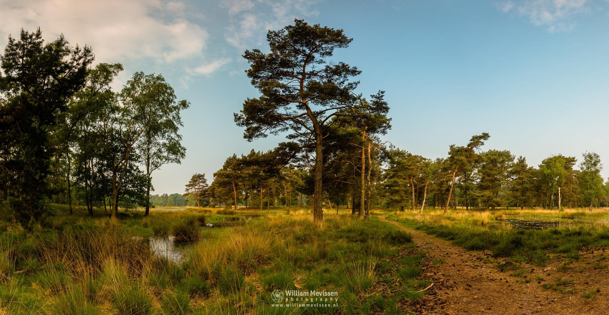 Photo in Landscape #ravenvennen lomm limburg no