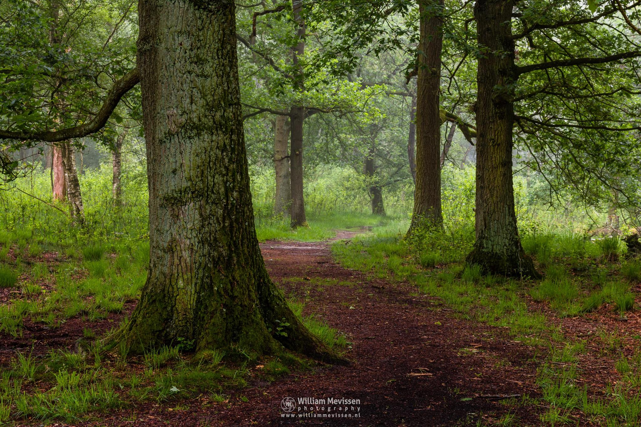 Tree Trunks by William Mevissen