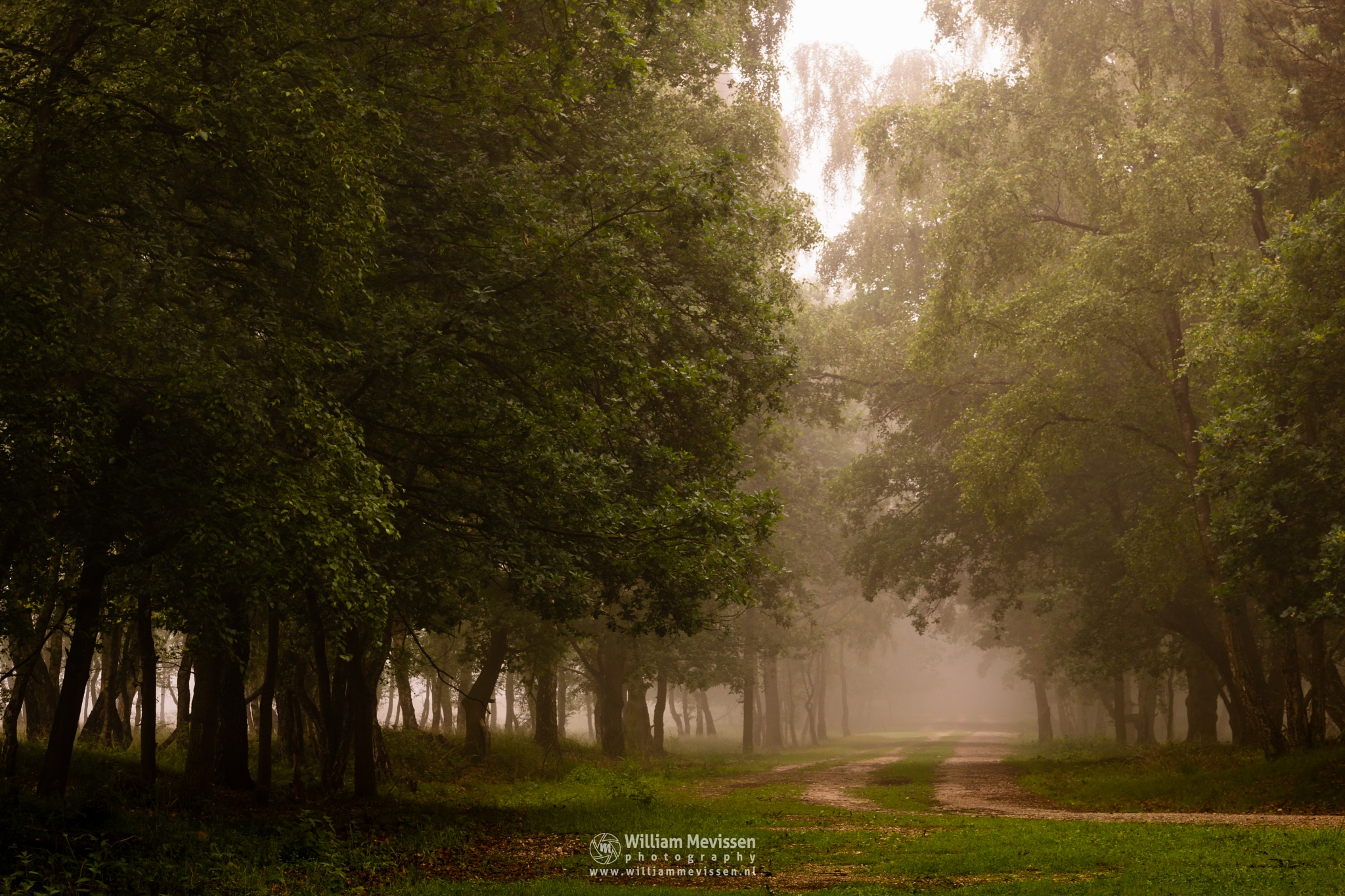 Foggy Forest Path by William Mevissen