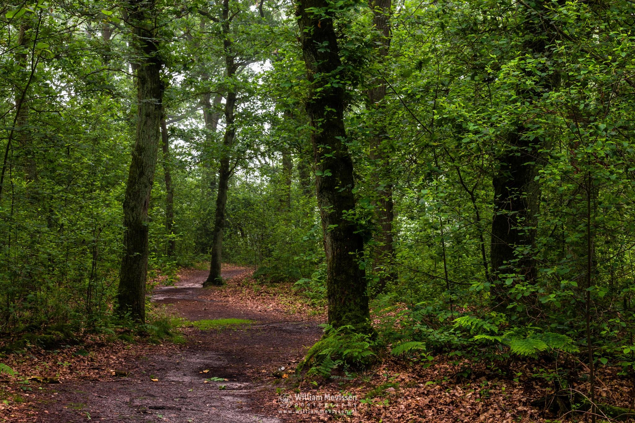 Green Forest Path by William Mevissen