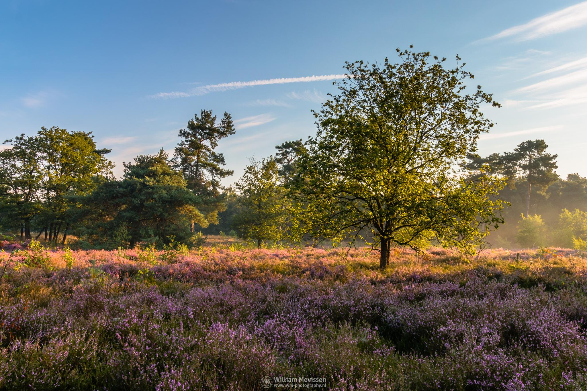 Sunrise Tree by William Mevissen