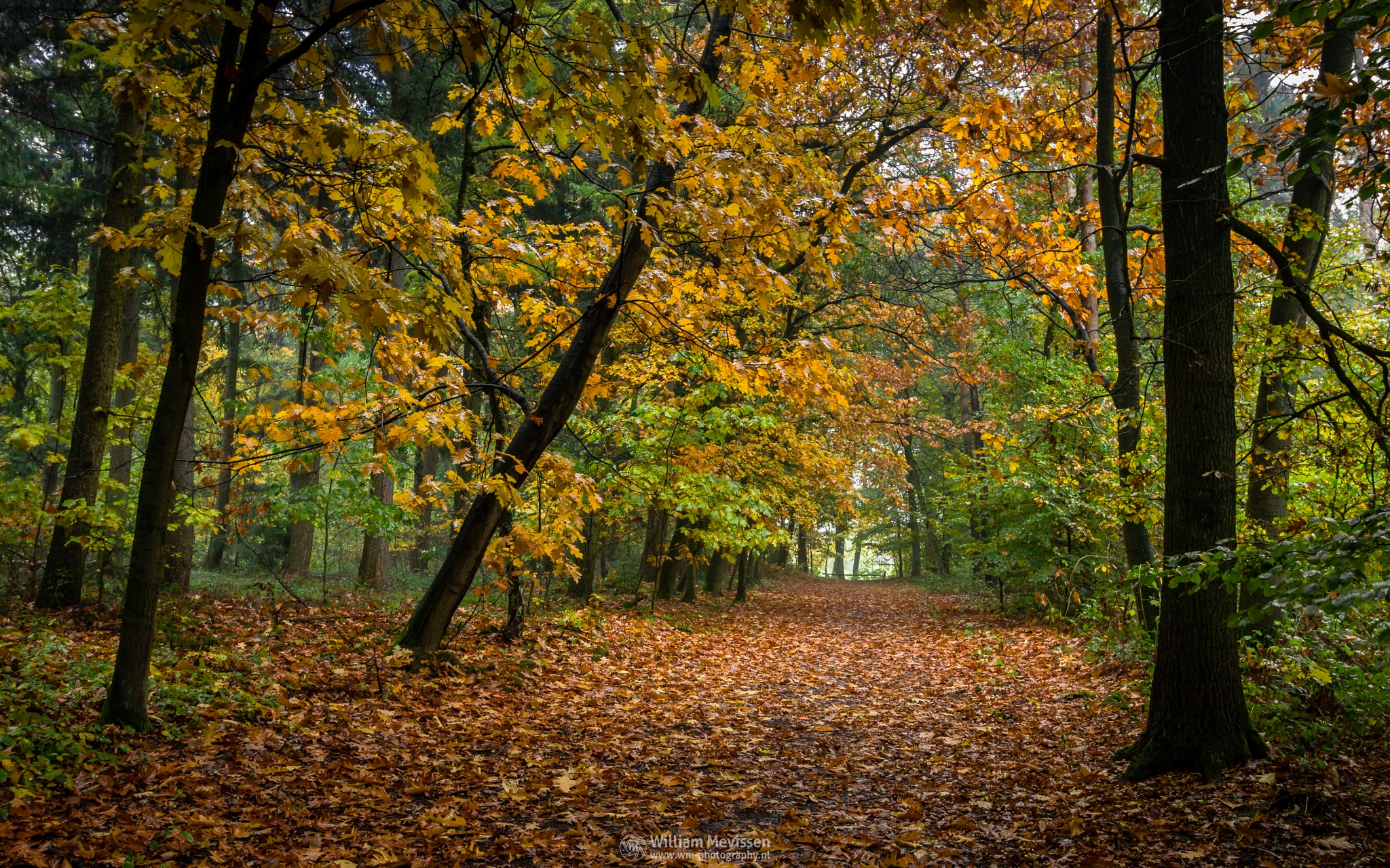 Drizzly Forest Path by William Mevissen