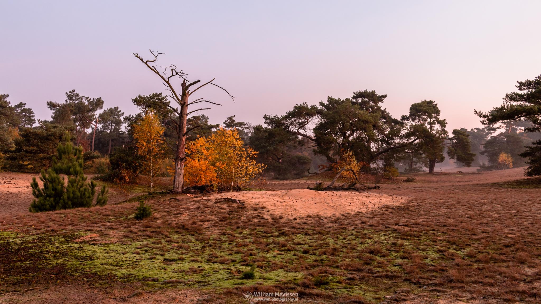 Autumn Twilight by William Mevissen