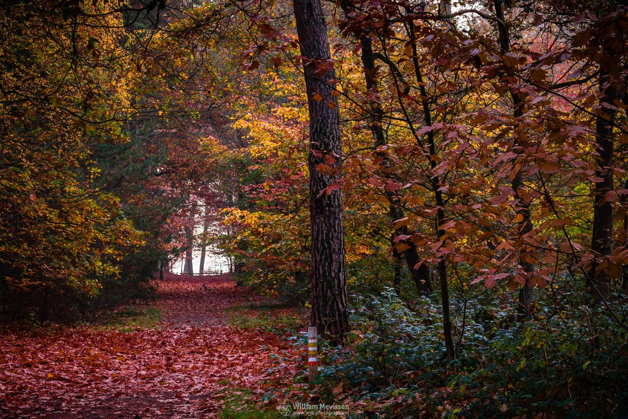 Autumn Palette I by William Mevissen
