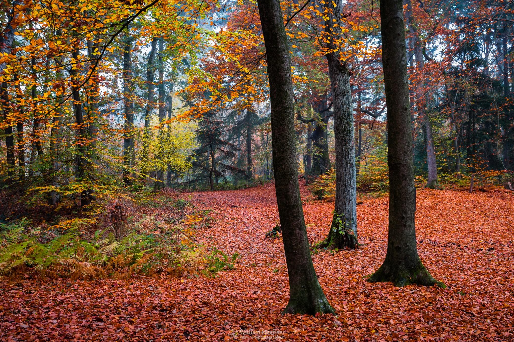 Red Carpet by William Mevissen