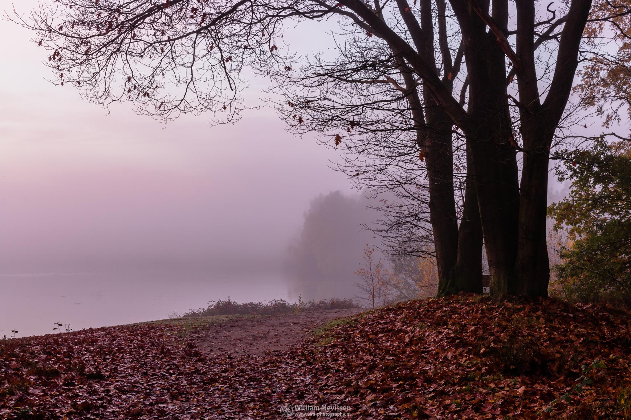 Misty Twilight Tree by William Mevissen