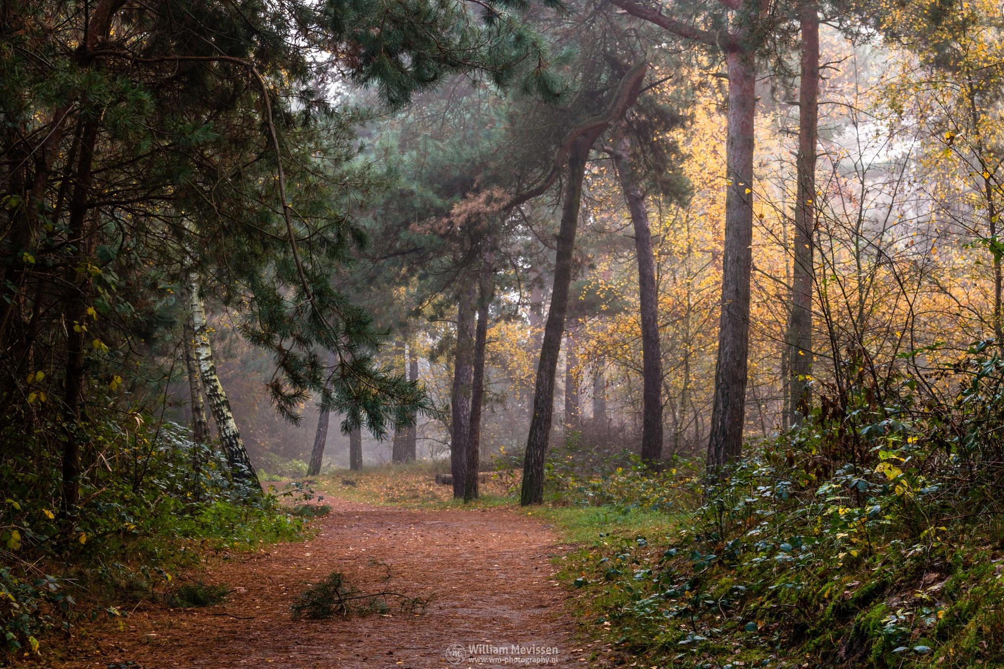 Photo in Nature #misty #mist #yellow #foggy #fog #light #green #morning #tree #trees #pine #pine forest #autumn #forest #trunk #silence #mood #path #hdr #lake #reindersmeer #maasduinen #limburg #noord-limburg #well #national park #nature