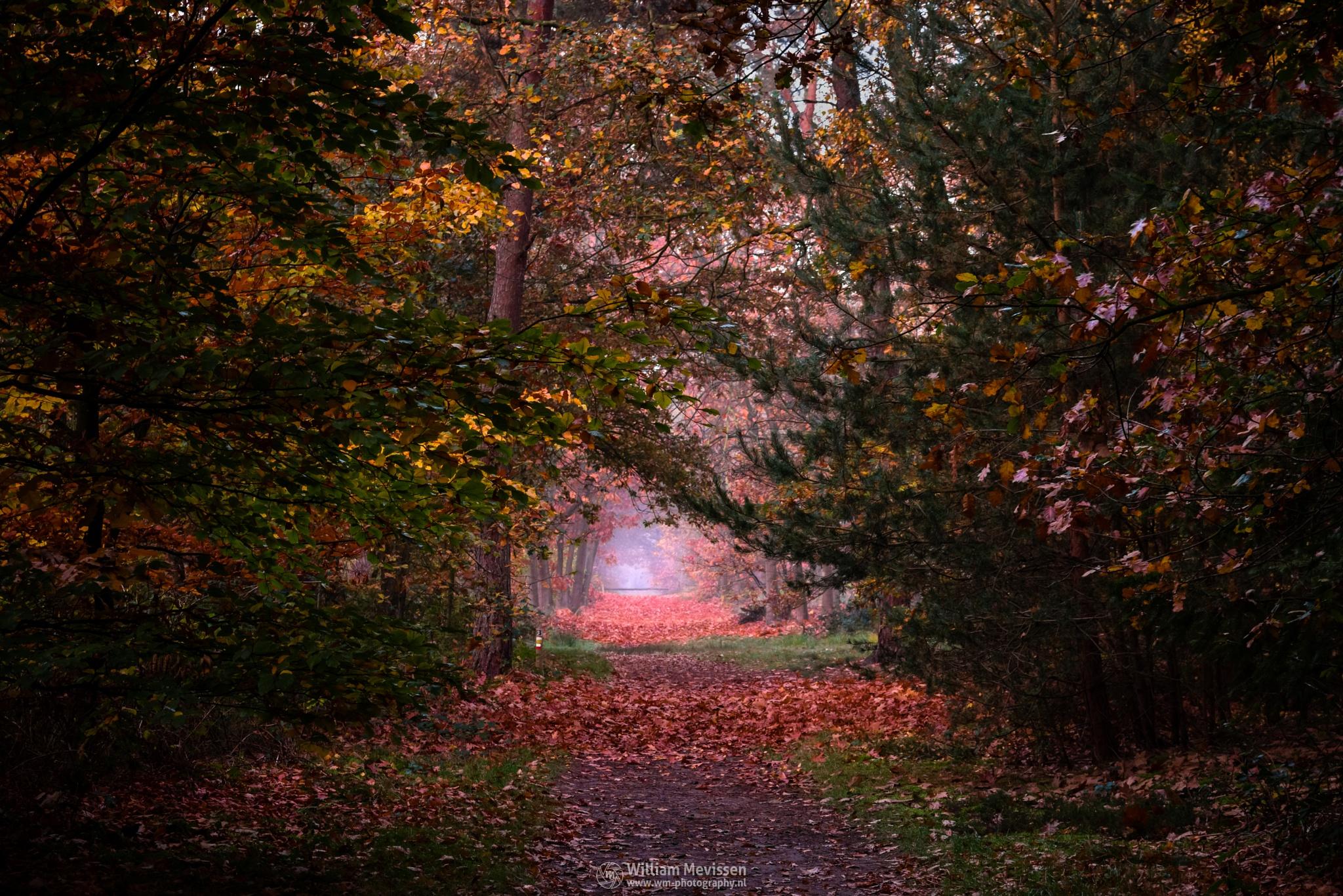 Photo in Nature #geijsteren #venray #oostrum #landgoed geijsteren #landgoed #estate #weichs de wenne #limburg #noord-limburg #nature #nature reserve #forest #woods #autumn #leaves #red #green #orange #yellow #geysteren #foliage #light #tree #trees #autumn palette #palette #mist #misty #fog #foggy