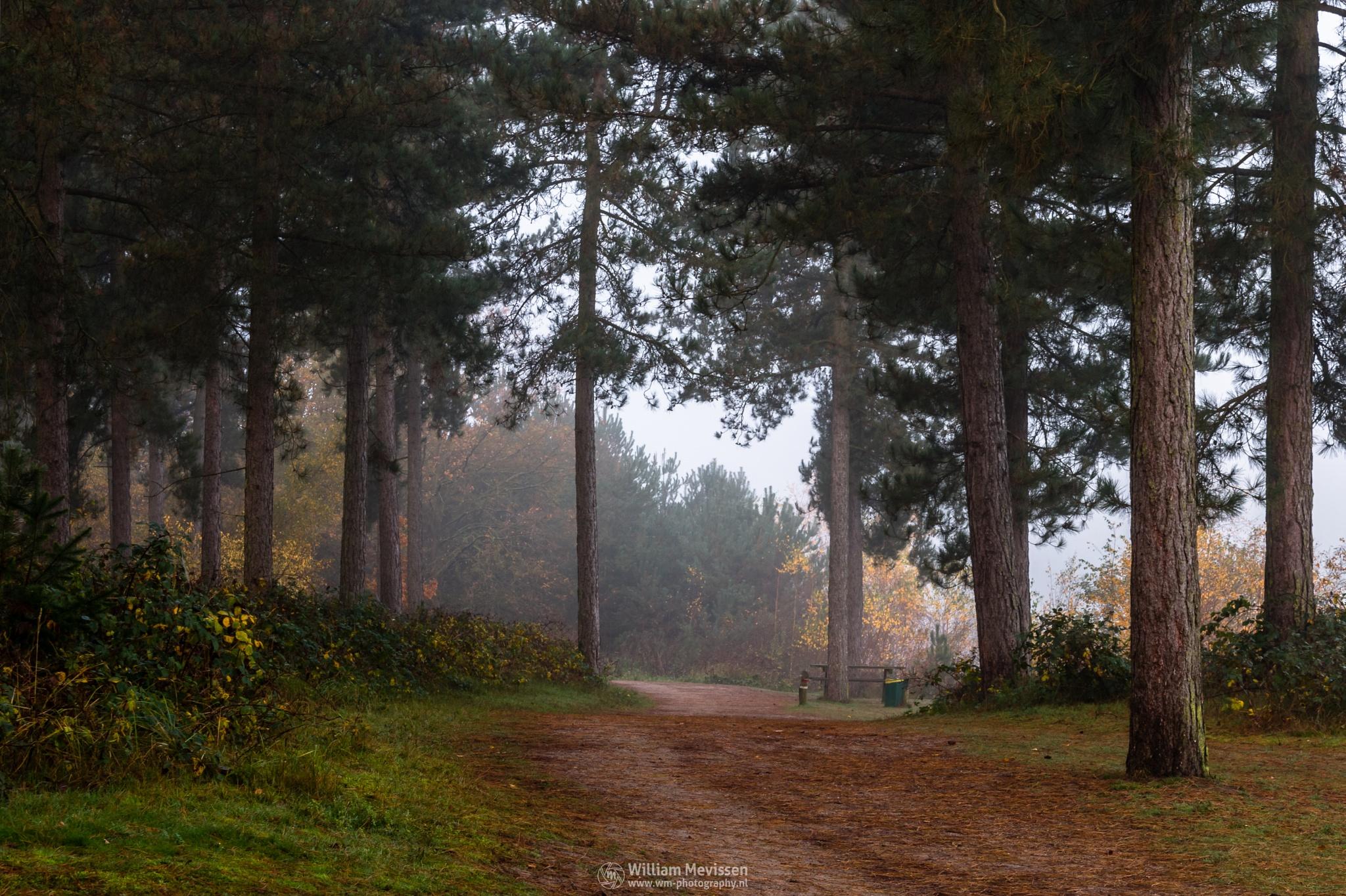 Misty Forest Path by William Mevissen