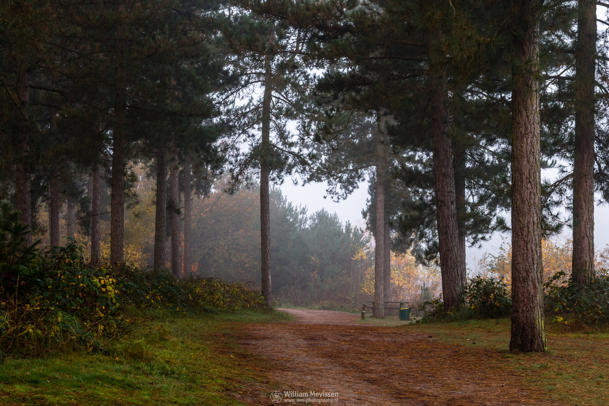 Photo in Nature #misty #mist #yellow #foggy #fog #light #green #morning #tree #trees #pine #pine forest #autumn #forest #trunk #silence #mood #path #hdr #reindersmeer #maasduinen #lake #limburg #noord-limburg #well #national park #nature