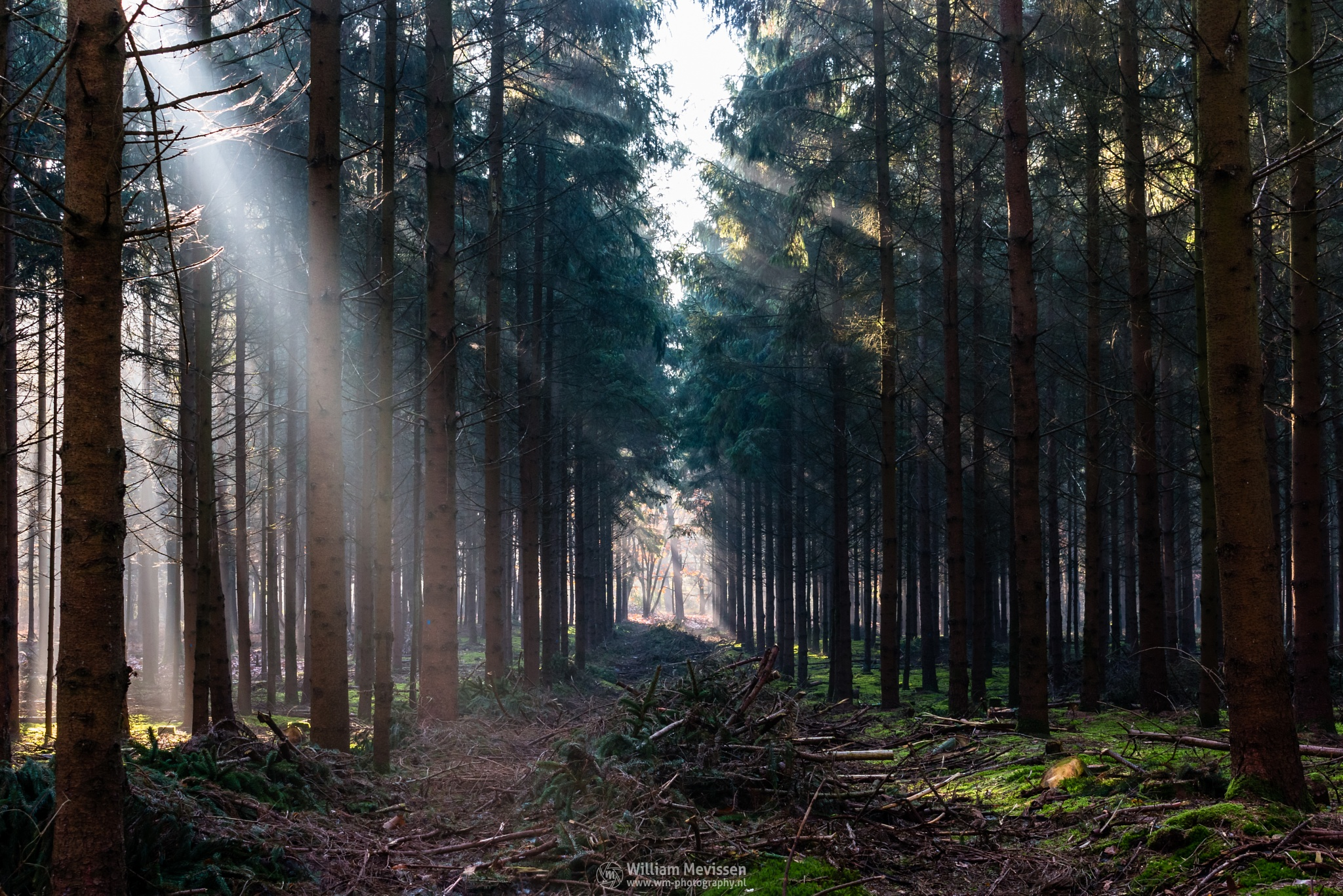Forest Rays by William Mevissen