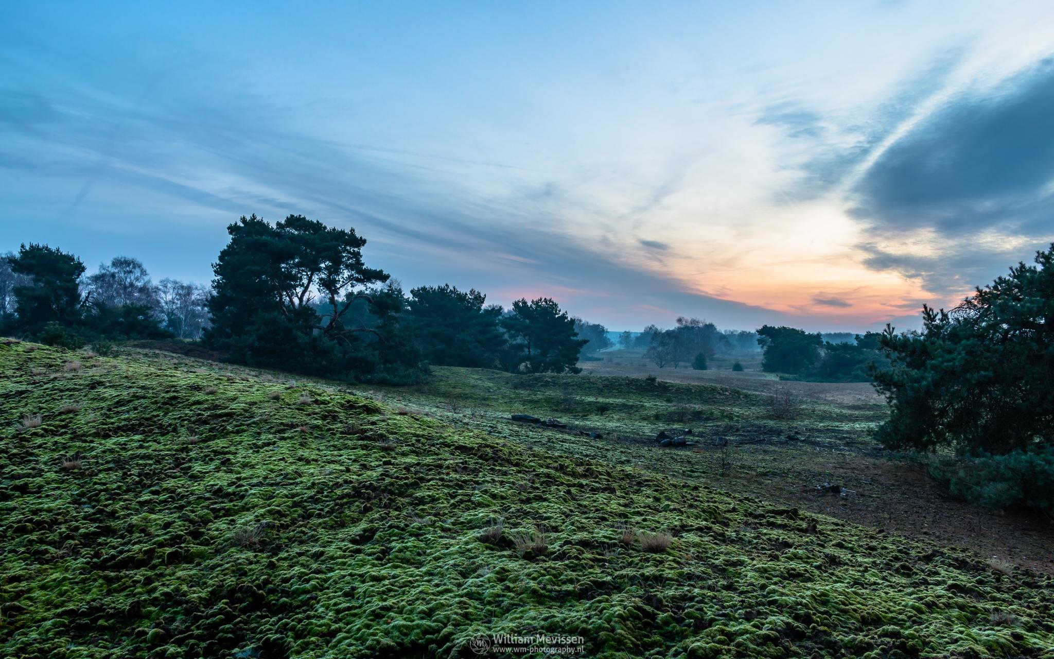 Moss by William Mevissen