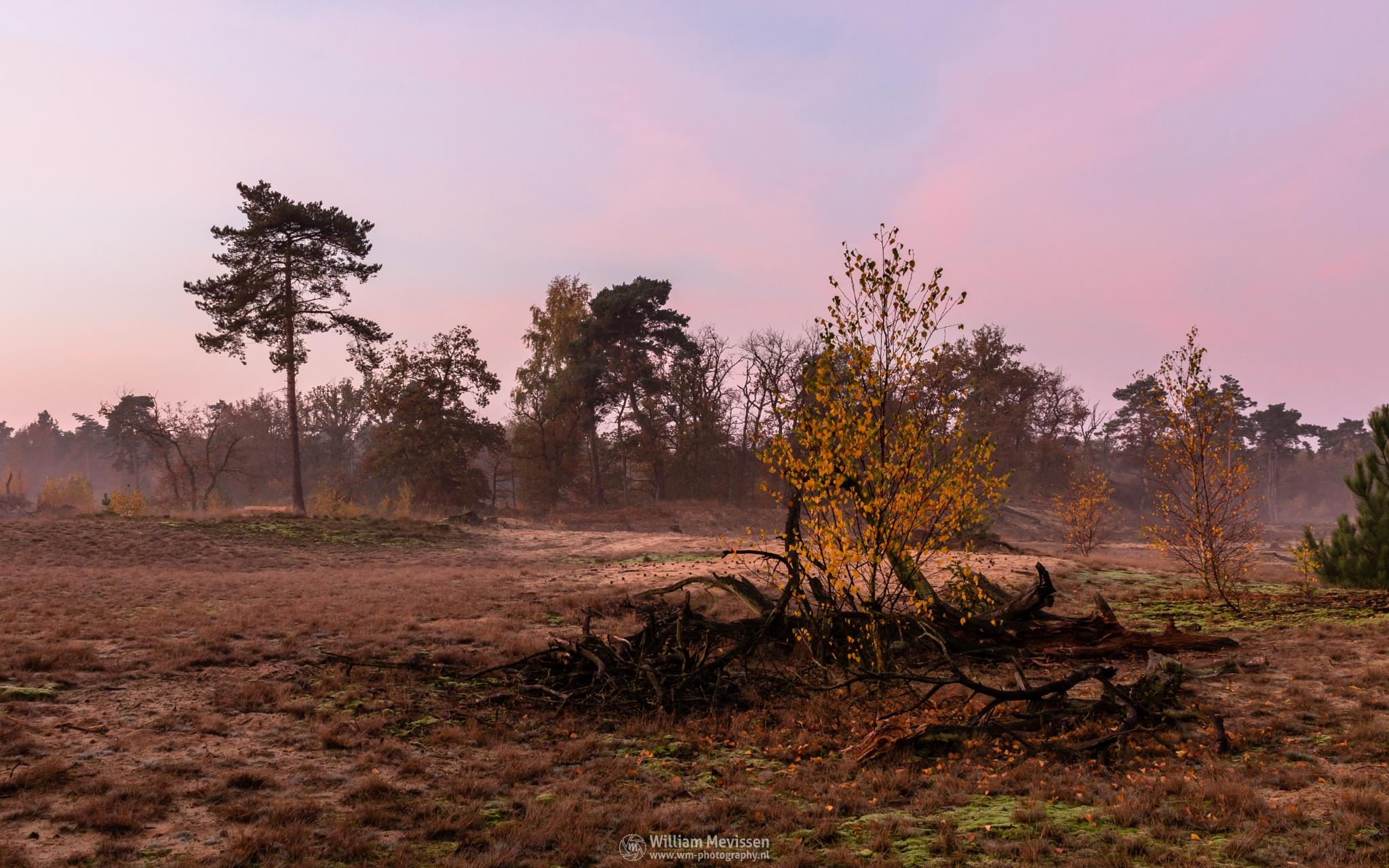 Misty Autumn Twilight  by William Mevissen