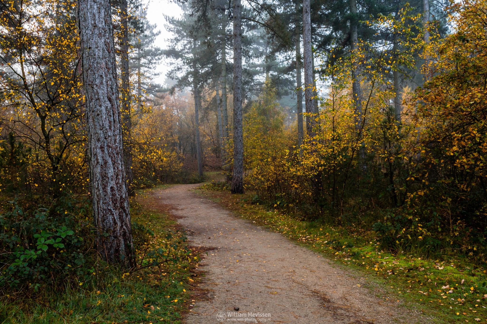 Autumn Forest Path by William Mevissen