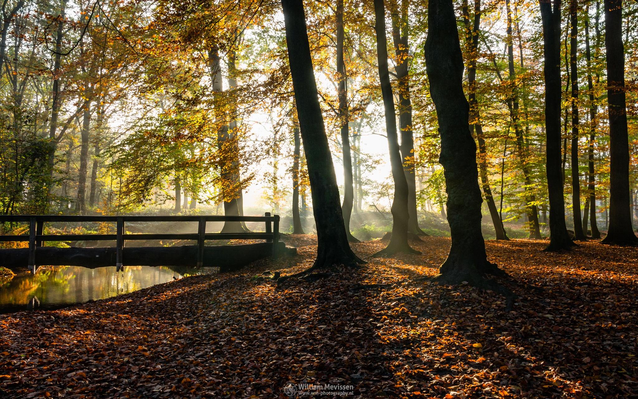 Photo in Nature #geijsteren #venray #oostrum #estate #landgoed #weichs de wenne #limburg #noord-limburg #nature #landgoed geijsteren #light #tree #trees #mist #misty #foggy #fog #foliage #nature reserve #forest #woods #leaves #geysteren #autumn #silhouettes #sunrise #bridge #trunk #oostrumse beek #brook