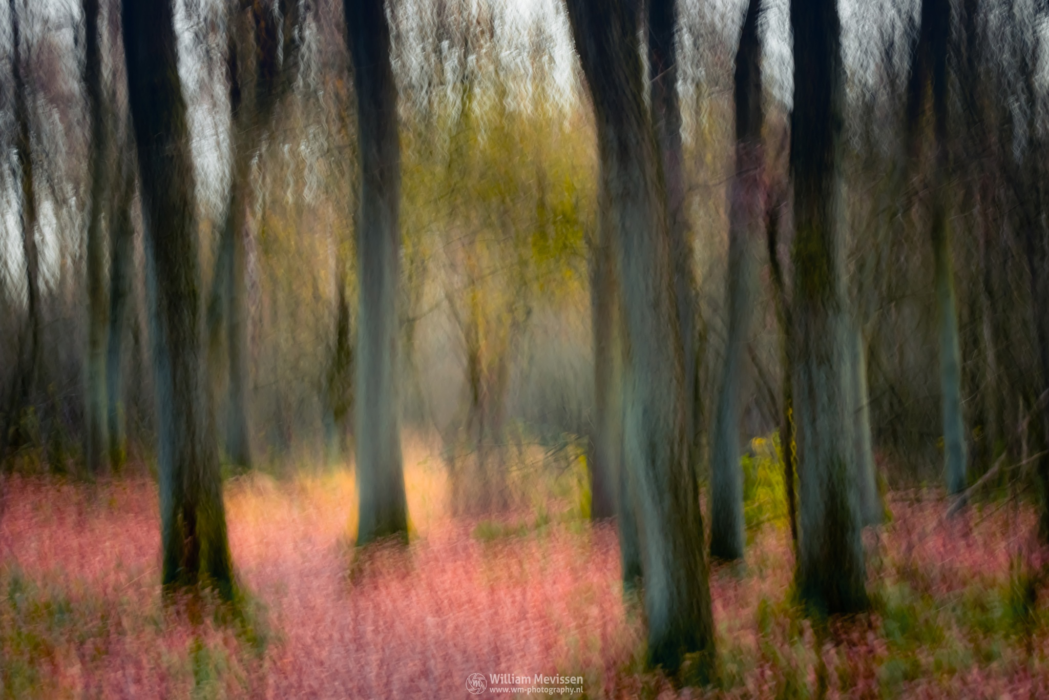 Photo in Abstract #forest #orange #light #tree #sky #landgoed #landgoed de hamert #estate #de hamert #hamert #maasduinen #noord-limburg #limburg #wellerlooi #national park #nature #limburgs landschap #trees #silhouette #silhouettes #red #pink #green #art #abstract #le #long exposure #movement
