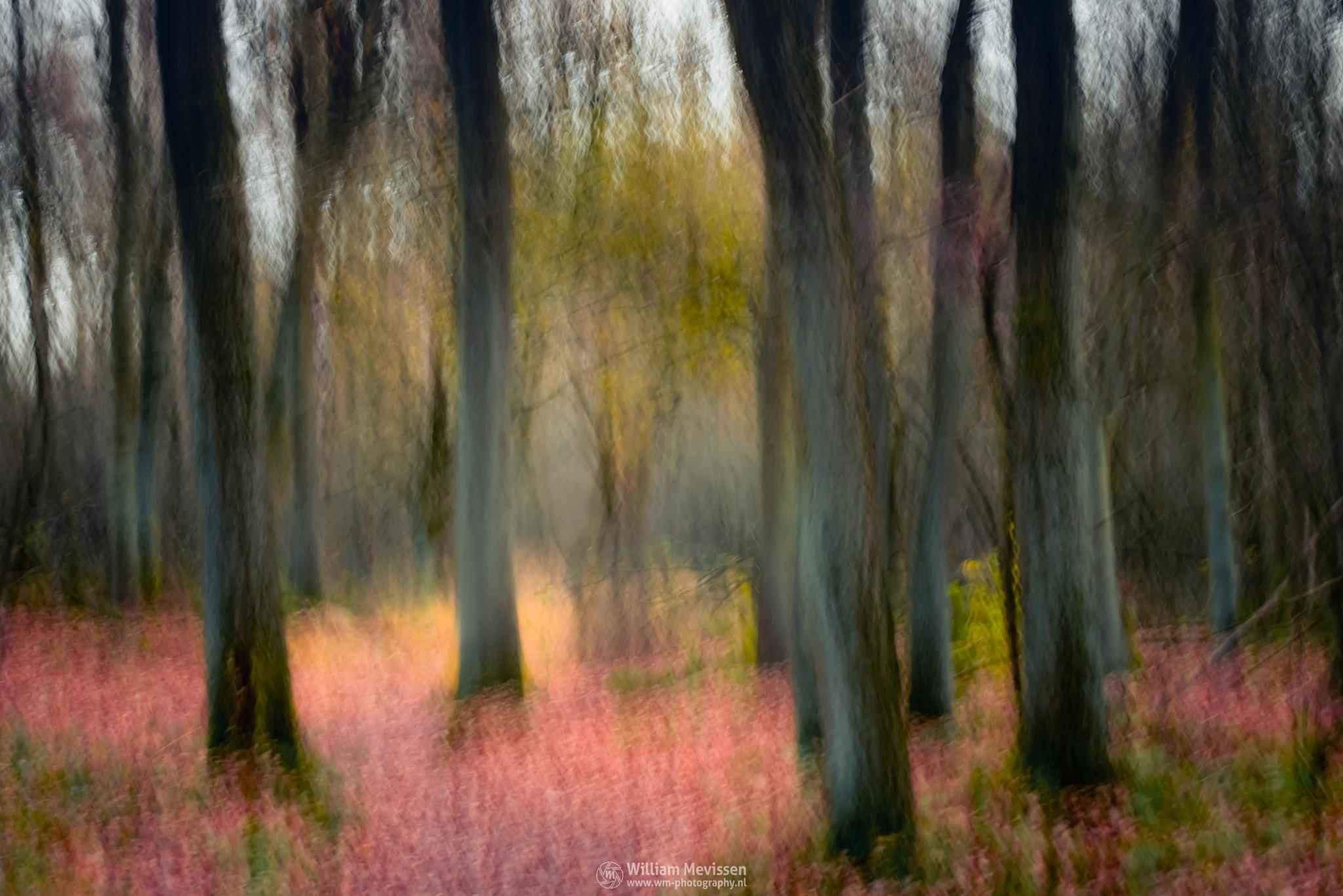 Autumn Impression by William Mevissen