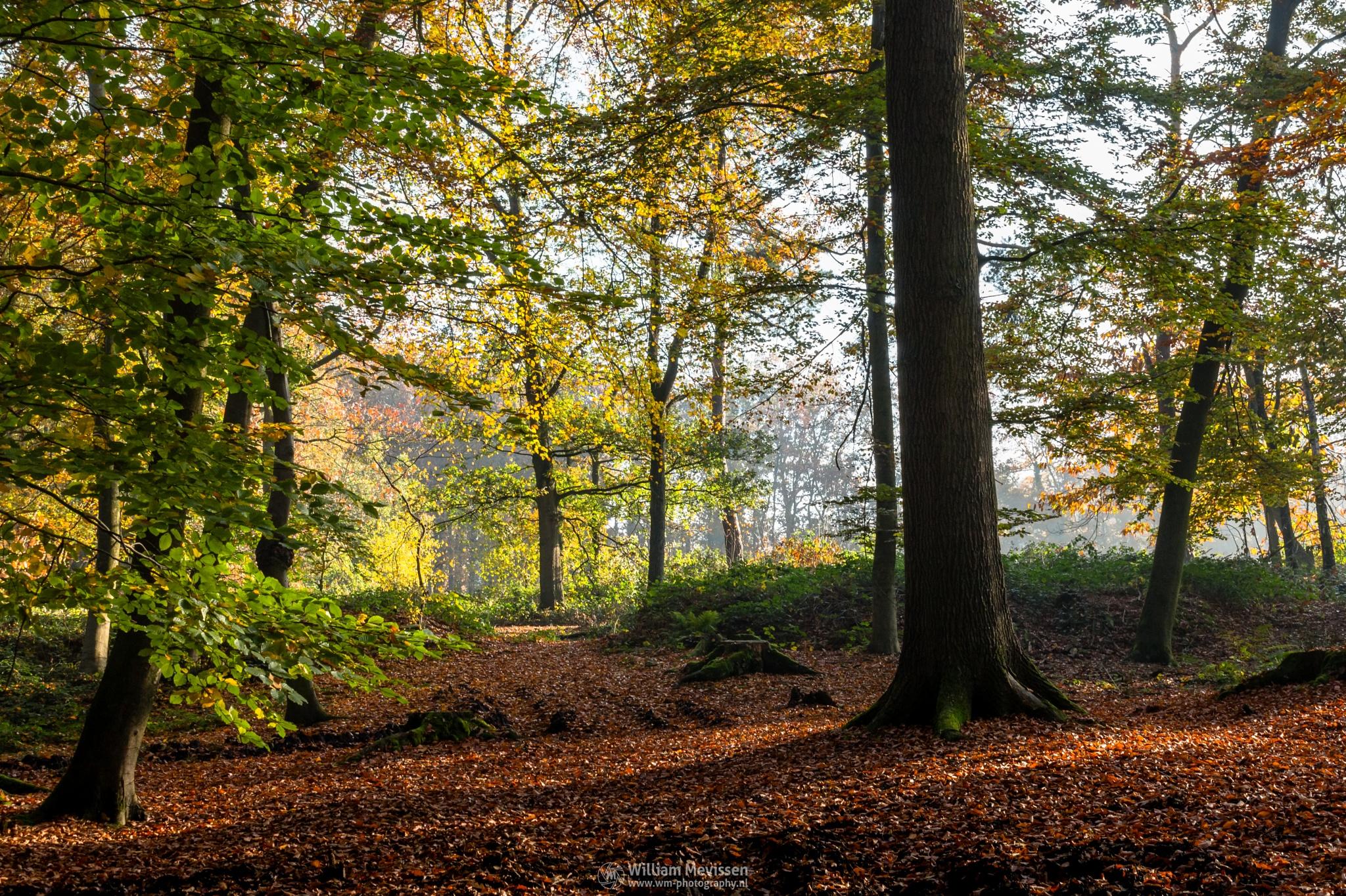 Autumn Light by William Mevissen