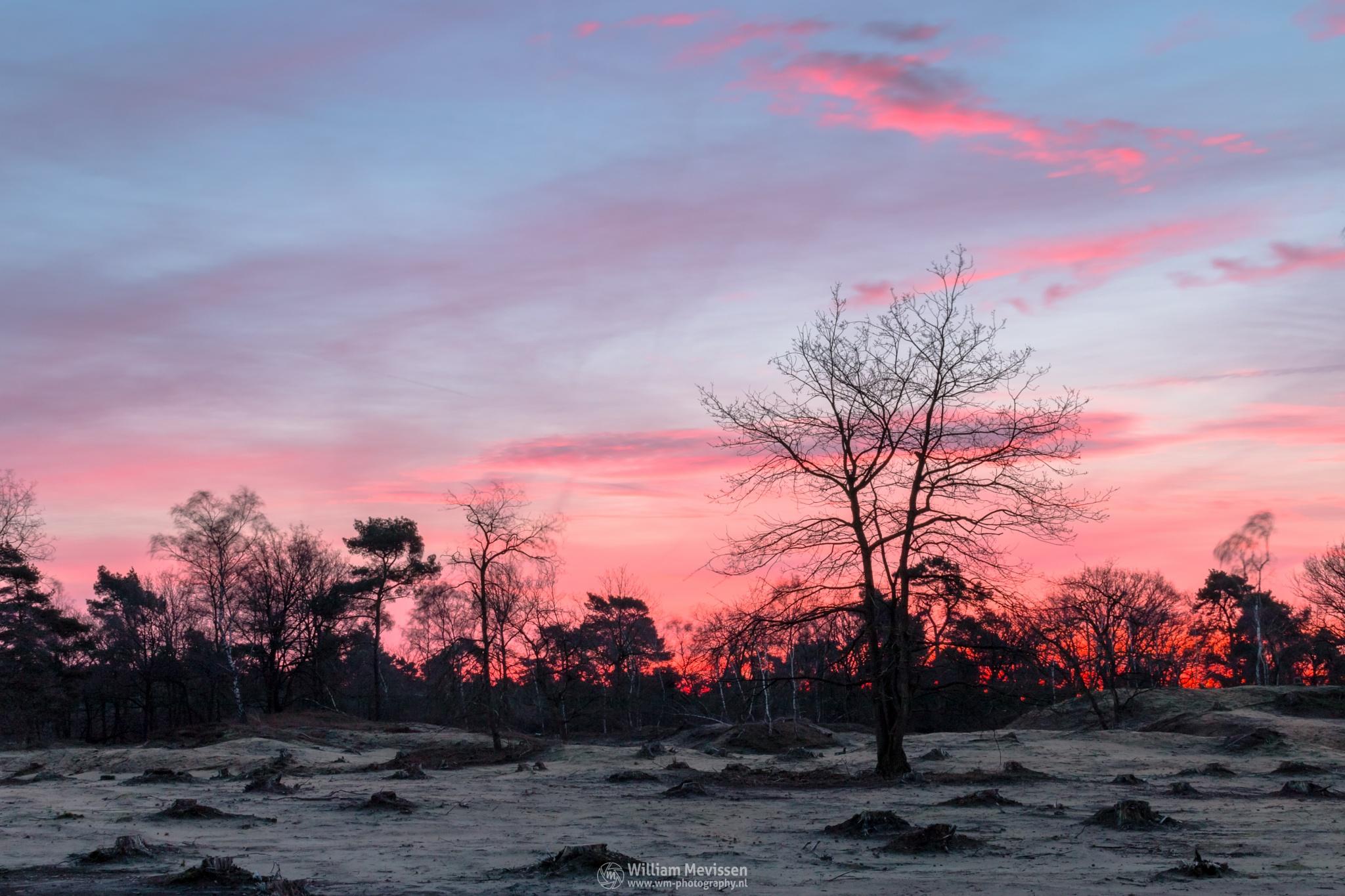 Red Twilight by William Mevissen