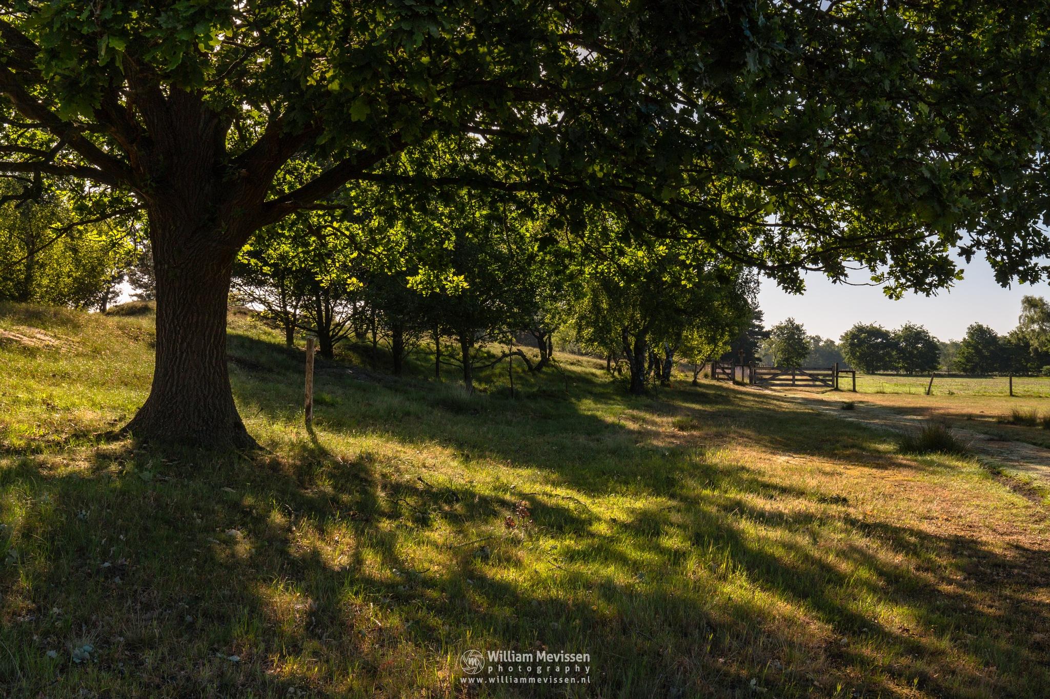 Tree Shadows by William Mevissen