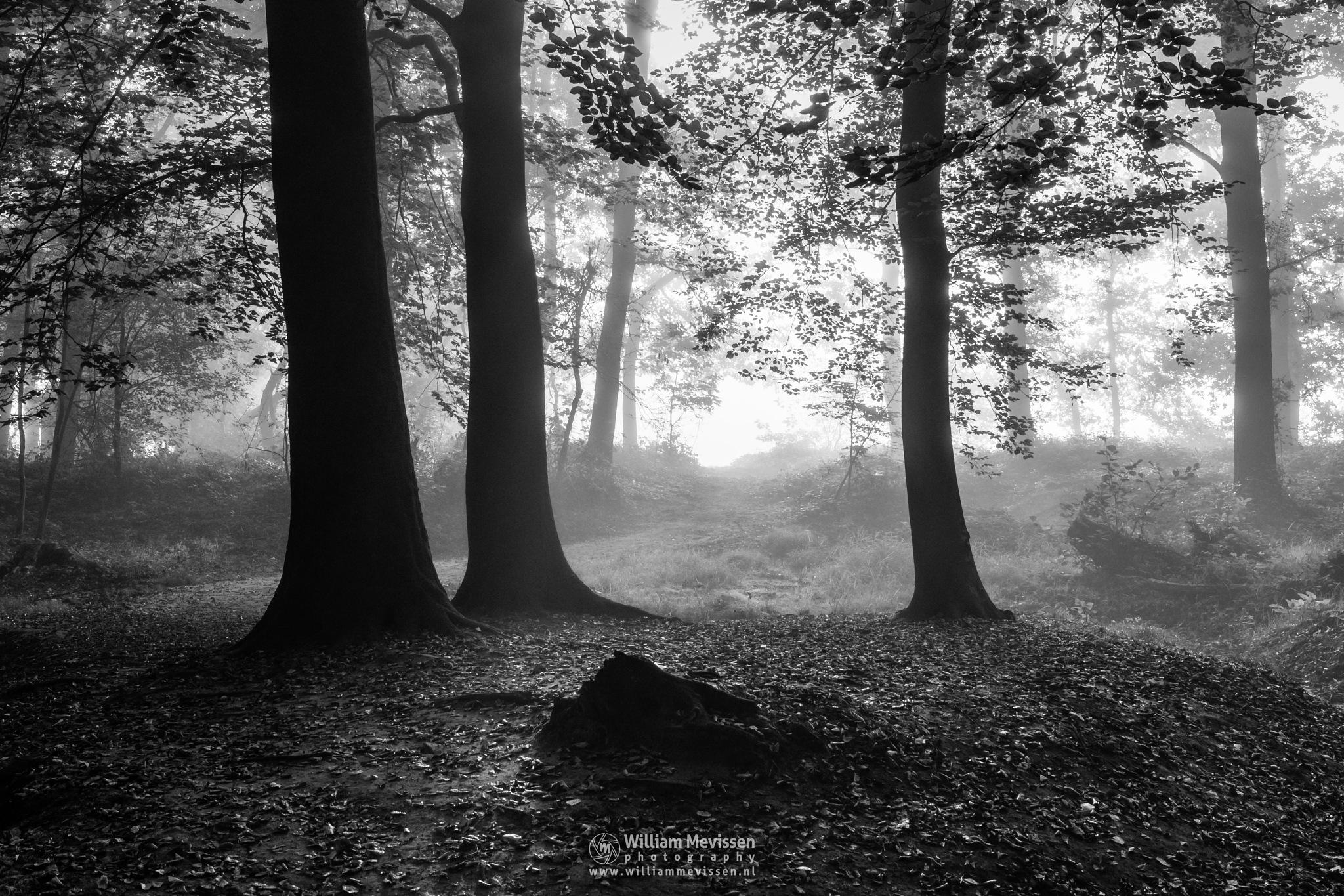 Photo in Black and White #geijsteren #venray #oostrum #landgoed geijsteren #limburg #noord-limburg #nature #woods #geysteren #forest #light #tree #trees #path #mist #fog #silhouettes #blackandwhite #b&w