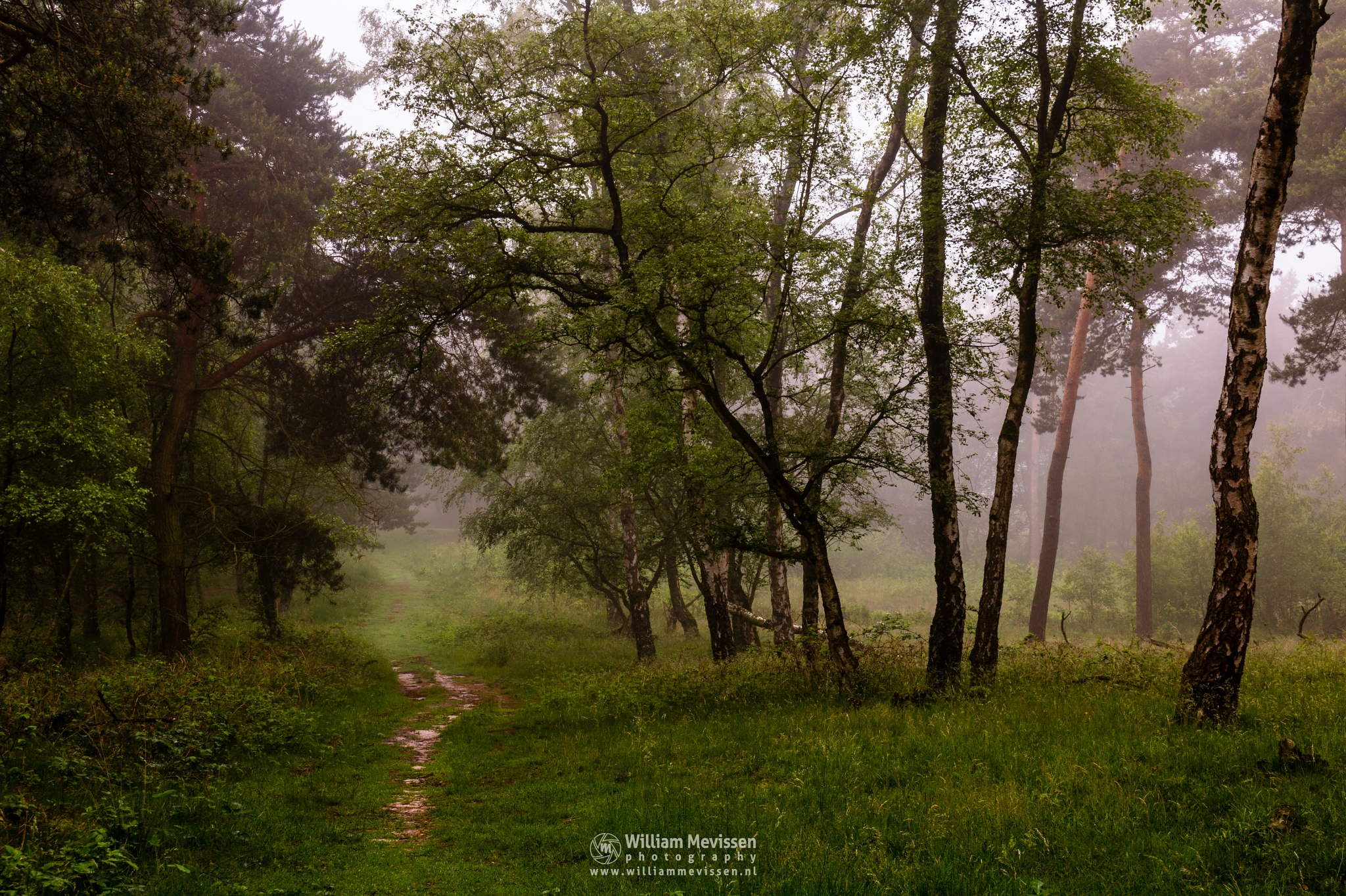 Into The Foggy Forest by William Mevissen