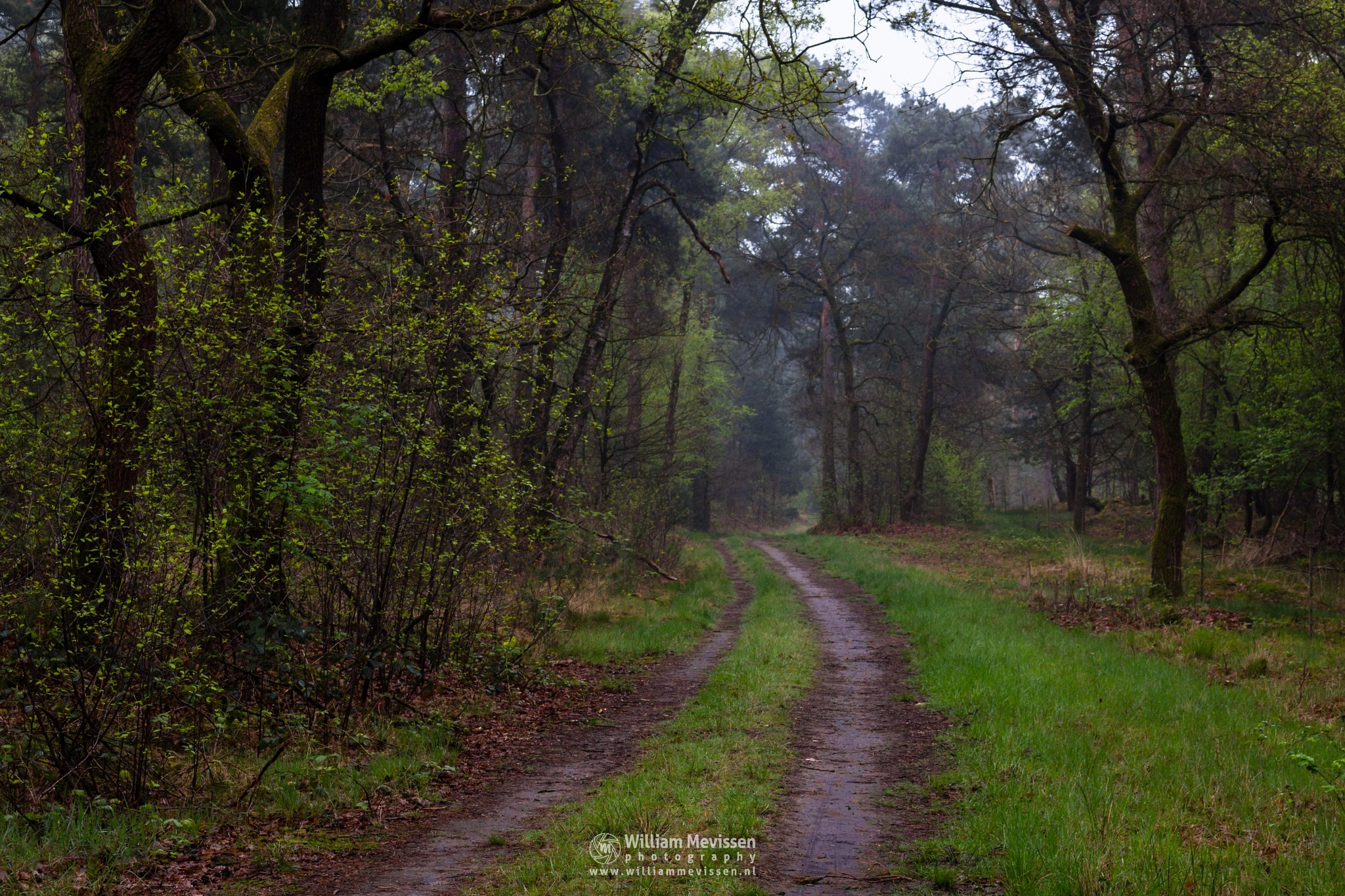 Drizzly Misty Forest by William Mevissen