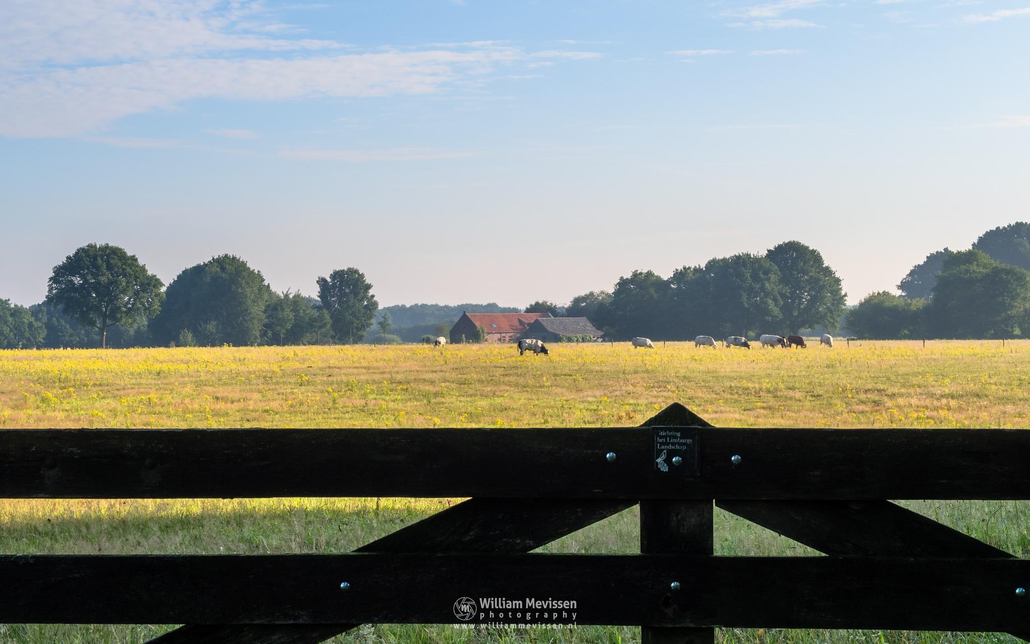 Photo in Landscape #boshuizerbergen boschhuizerbe #boshuizerbergen #limburg #boschhuizerbergen #noord-limburg #venray #forest #nature #netherlands #grasses #summer #green #meadows #fence #gate #limburgs landschap